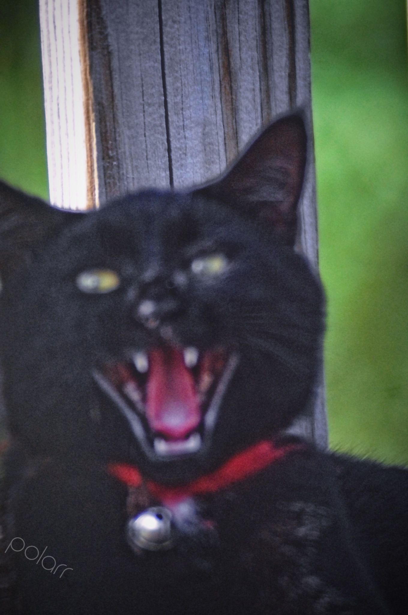 FRAIDY CAT!!!  by Bonnie Rhoades