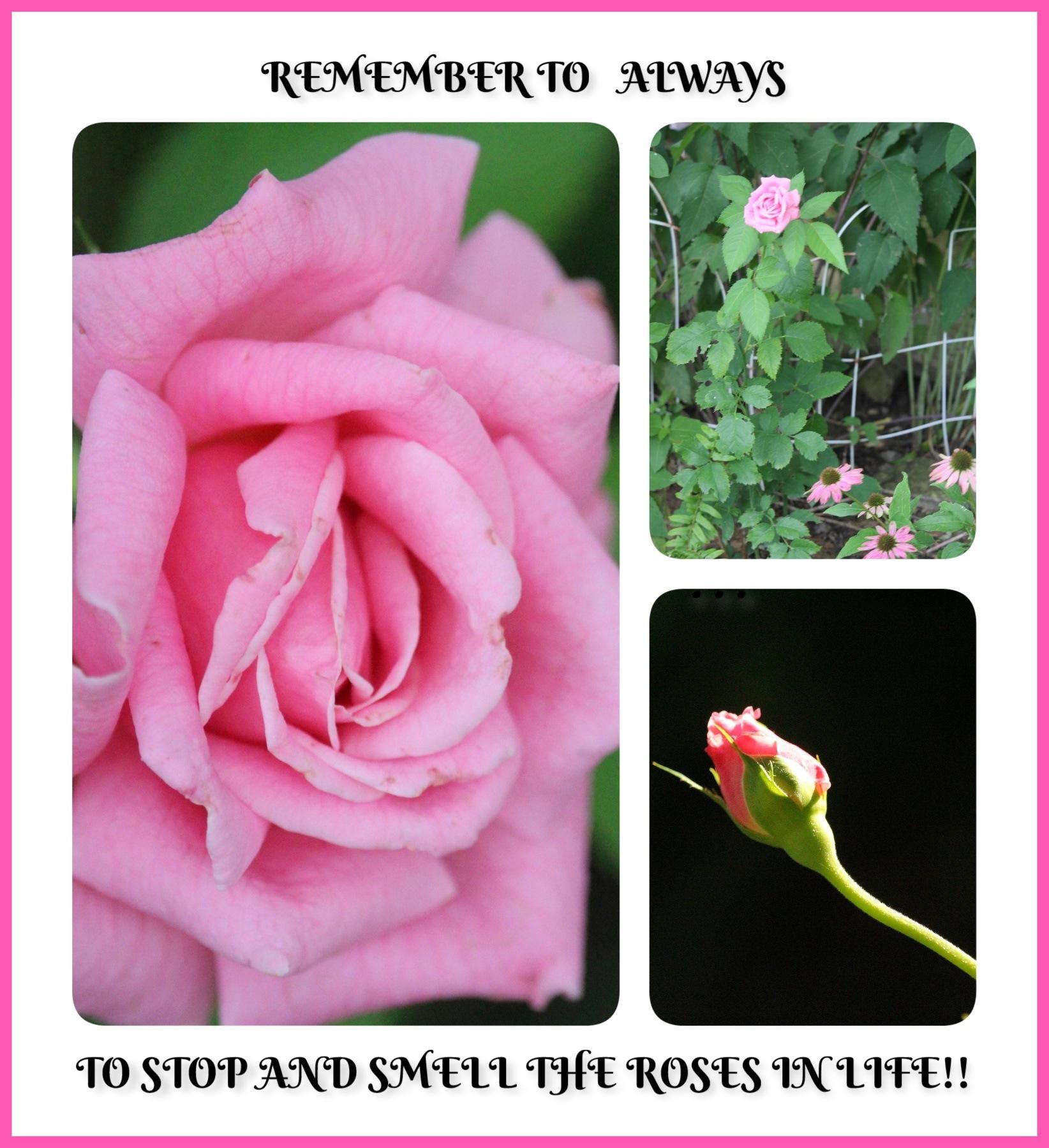 """"""" REMEMBER"""" by Bonnie Rhoades"""