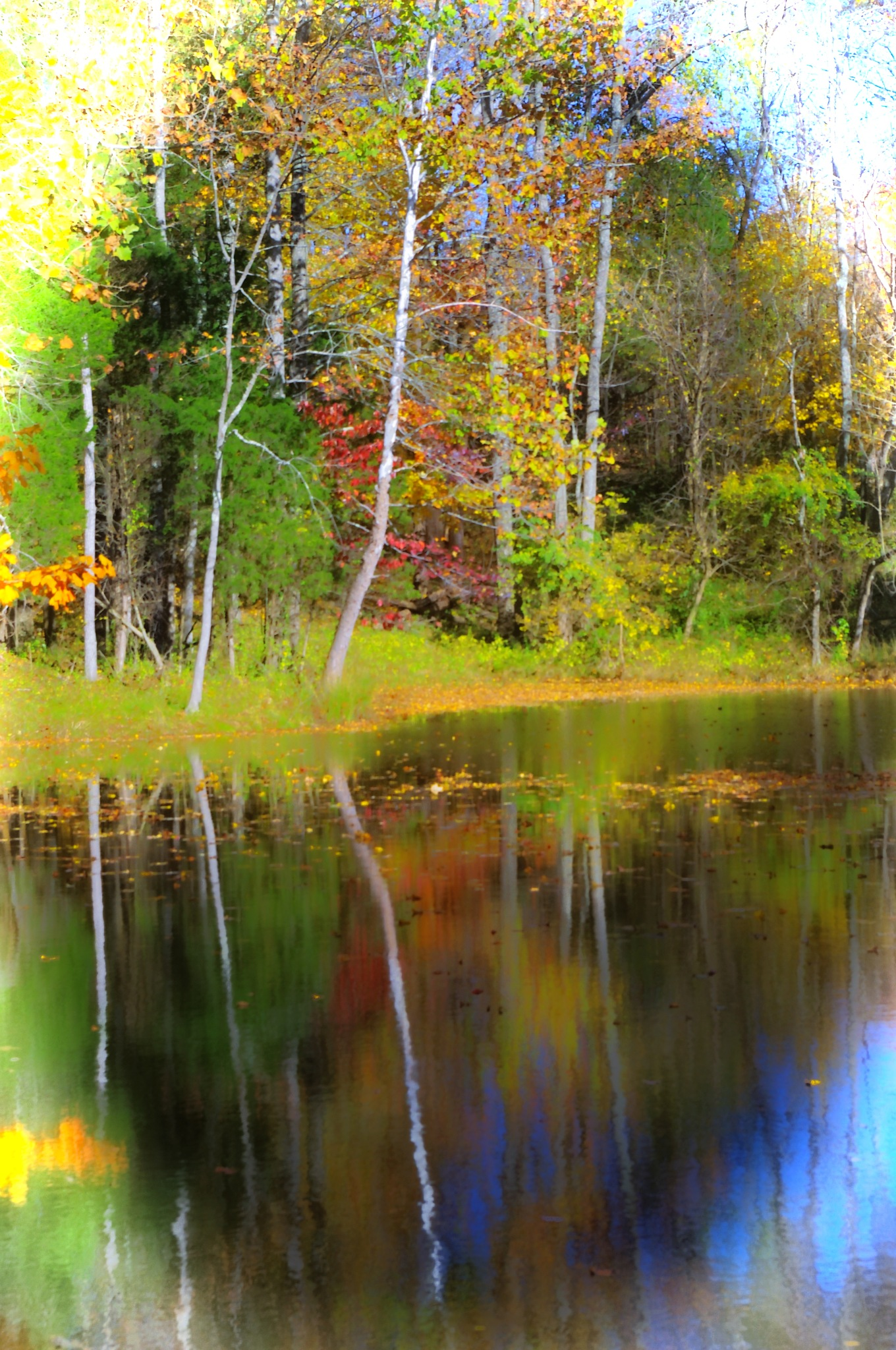 THE BEAUTY OF FALL by Bonnie Rhoades