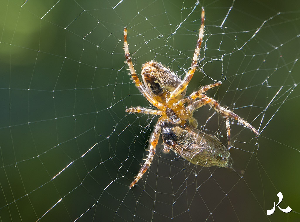 In the web by jacquesraffin