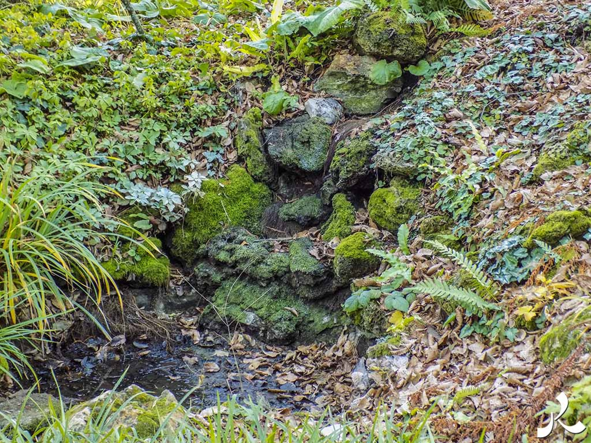 Moss in the garden by jacquesraffin
