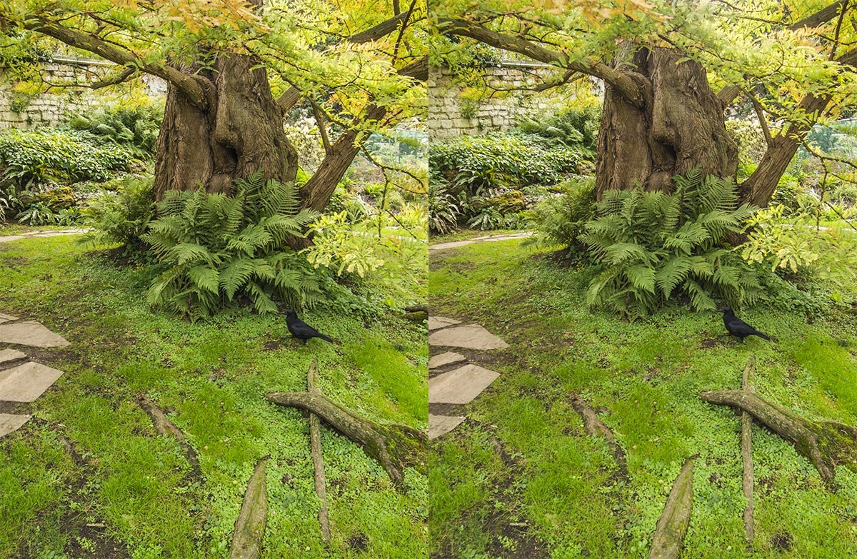 Green stereoscopy by jacquesraffin