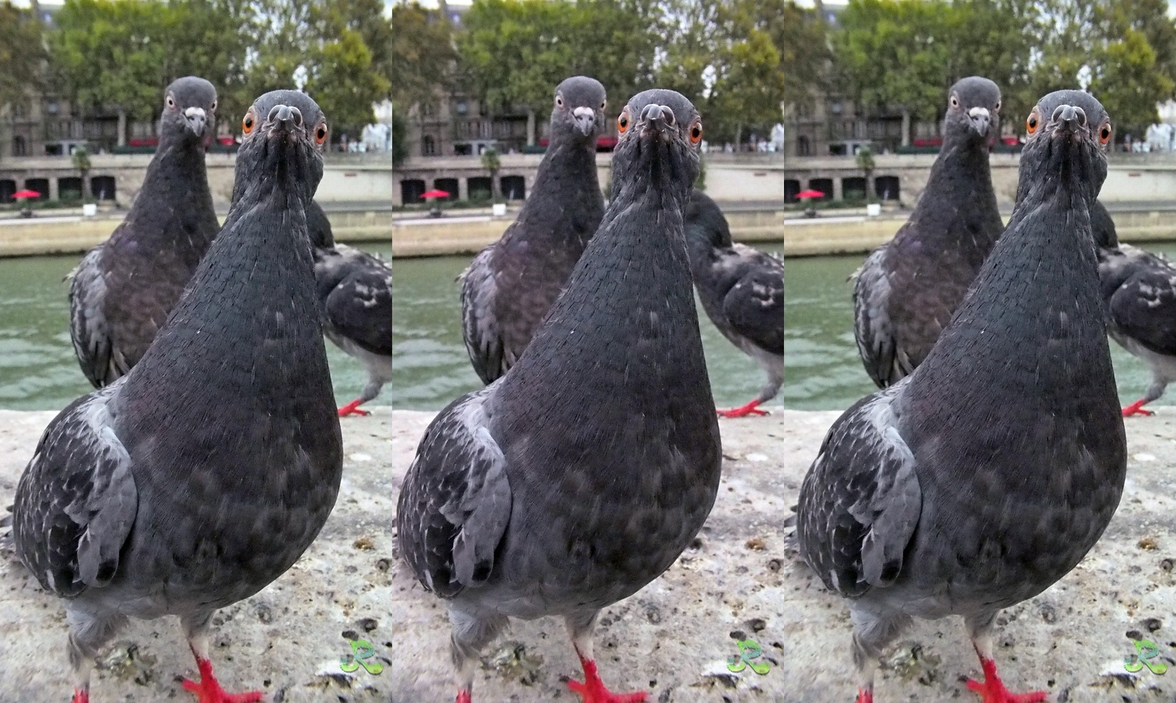 A funny one… — Stereoscopy by jacquesraffin
