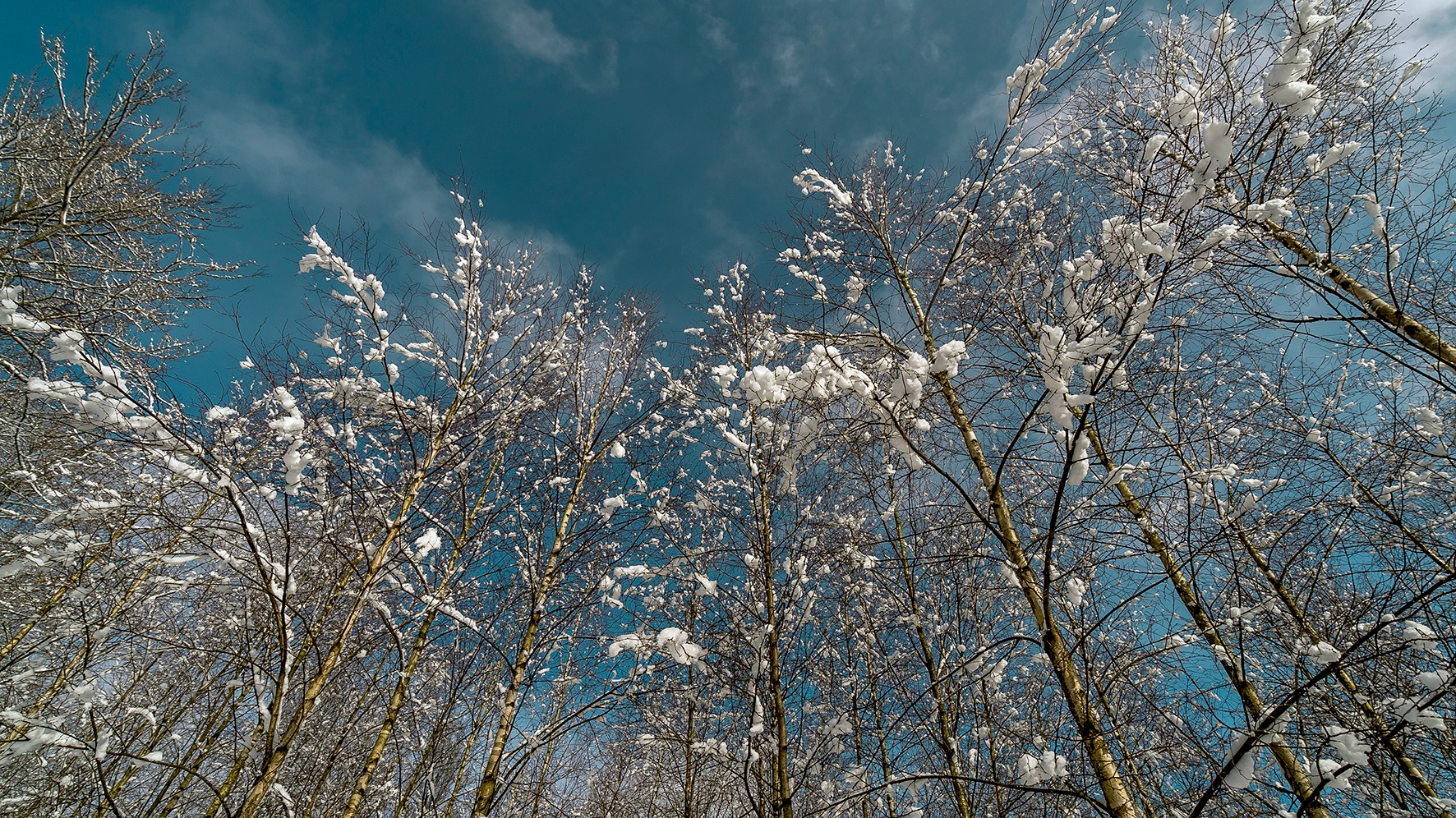 Like cotton by Henry Johannes