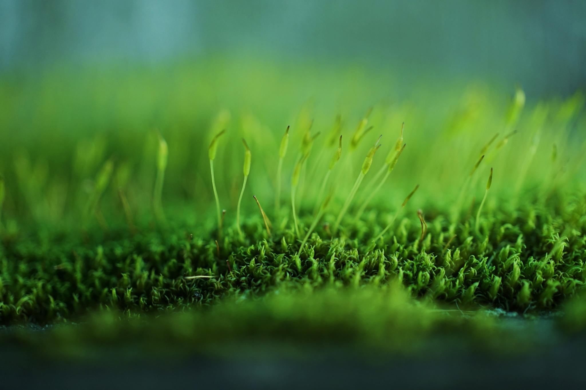 Mossy Green by Gina Hammon