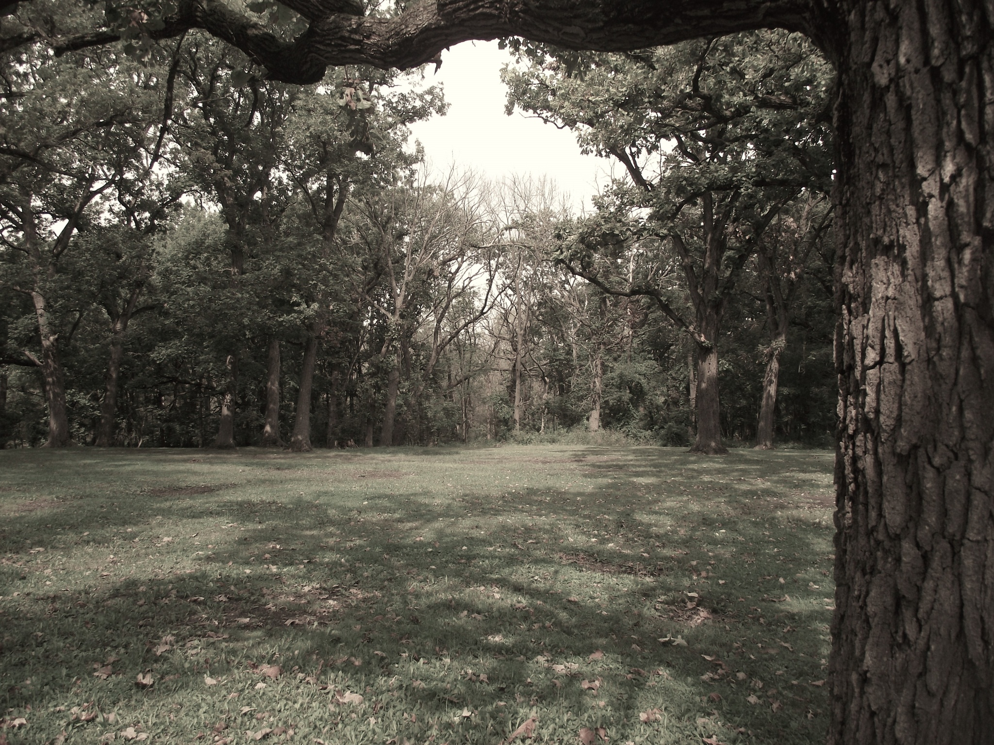 In the forest preserve by mzrice528
