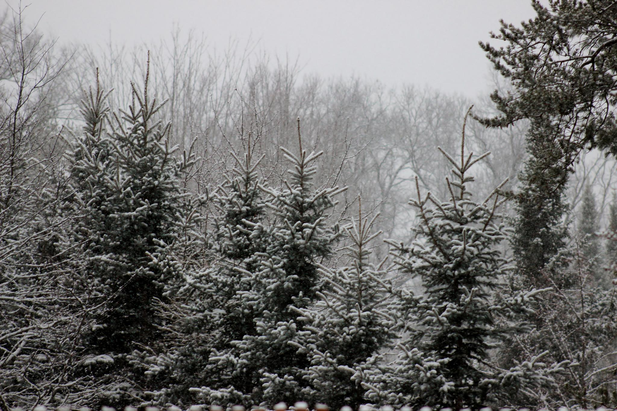 Easter morning snow. by Angela Mead