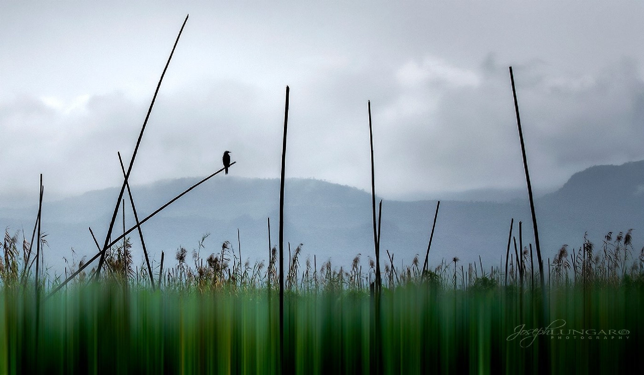 Floating Fields by lungaro1