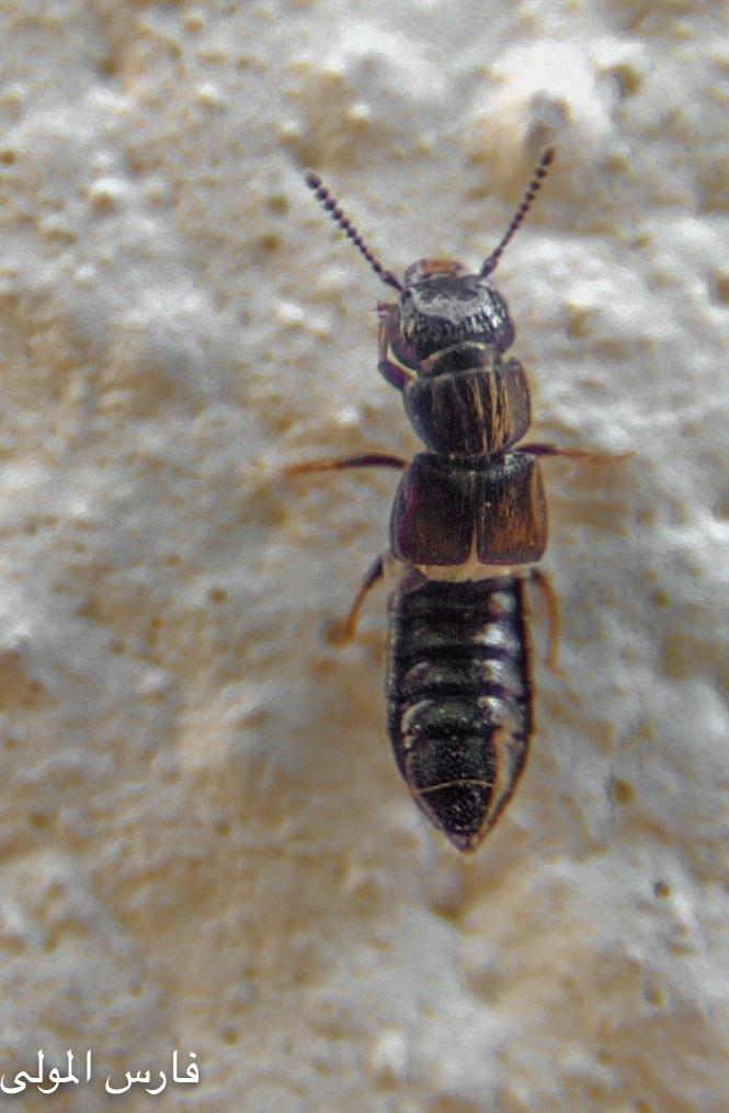 bug by  faris albaggoua