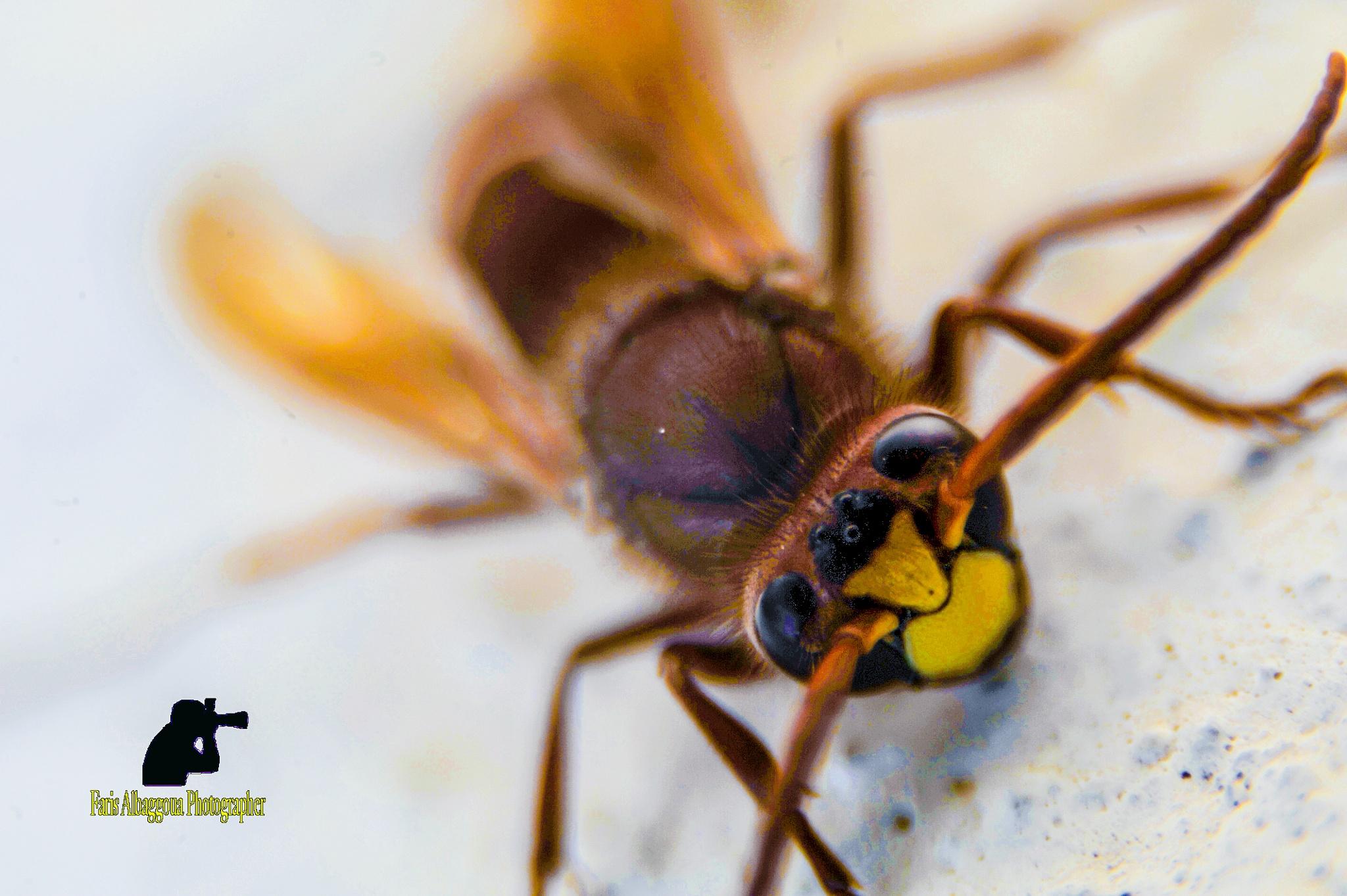 wasp by  faris albaggoua