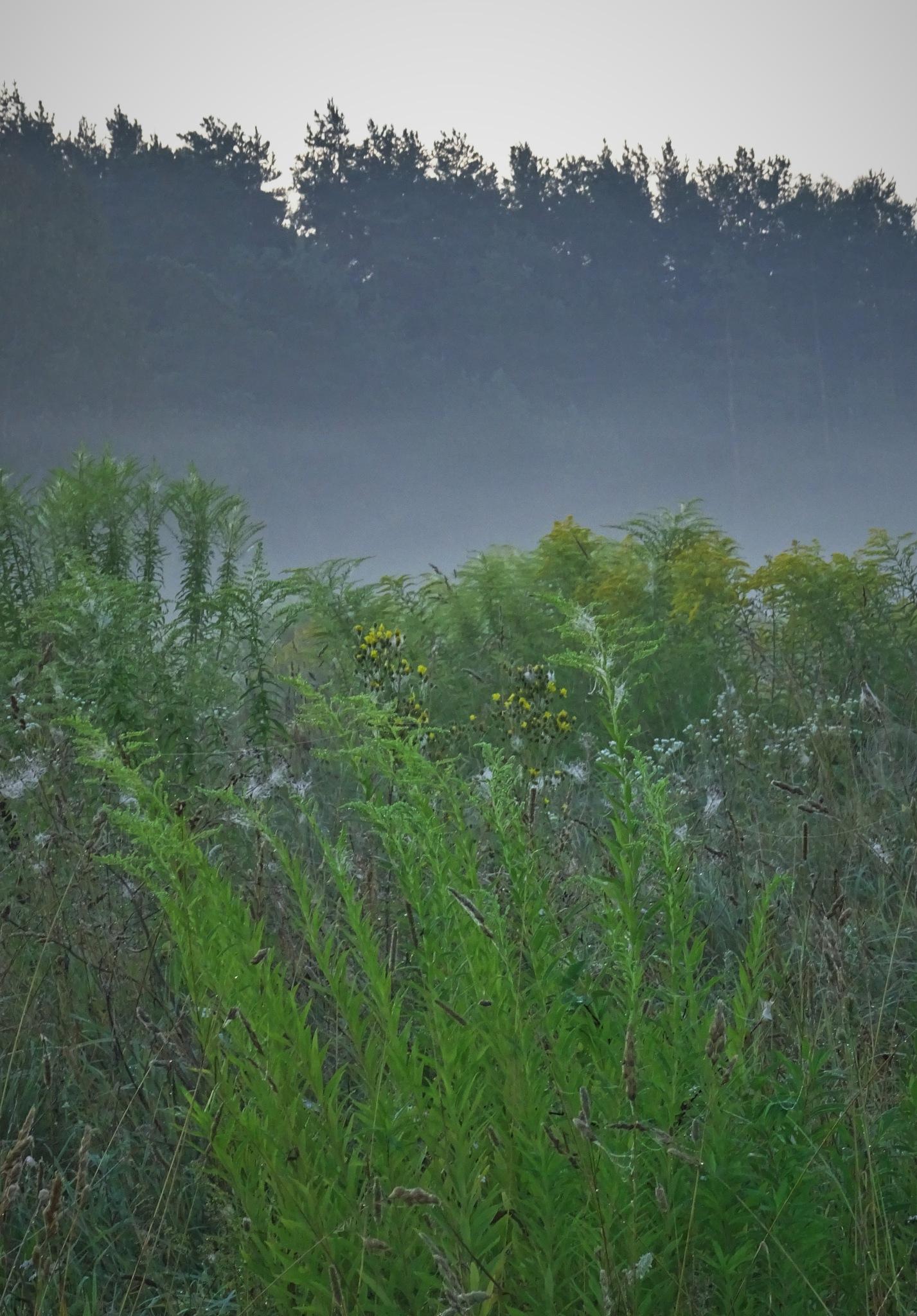 Morning fog. by vita.tucaite