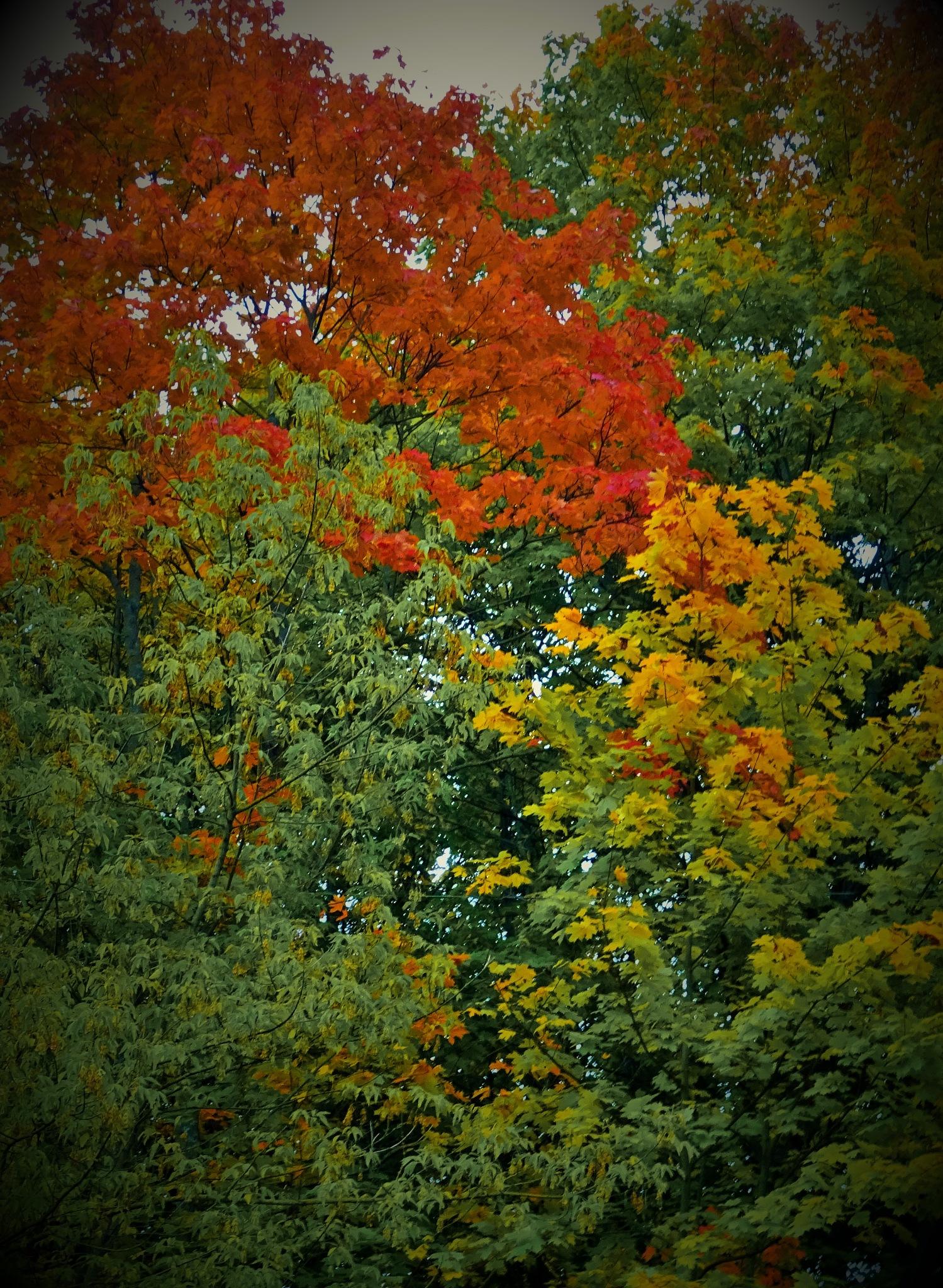 Autumn colors. by vita.tucaite