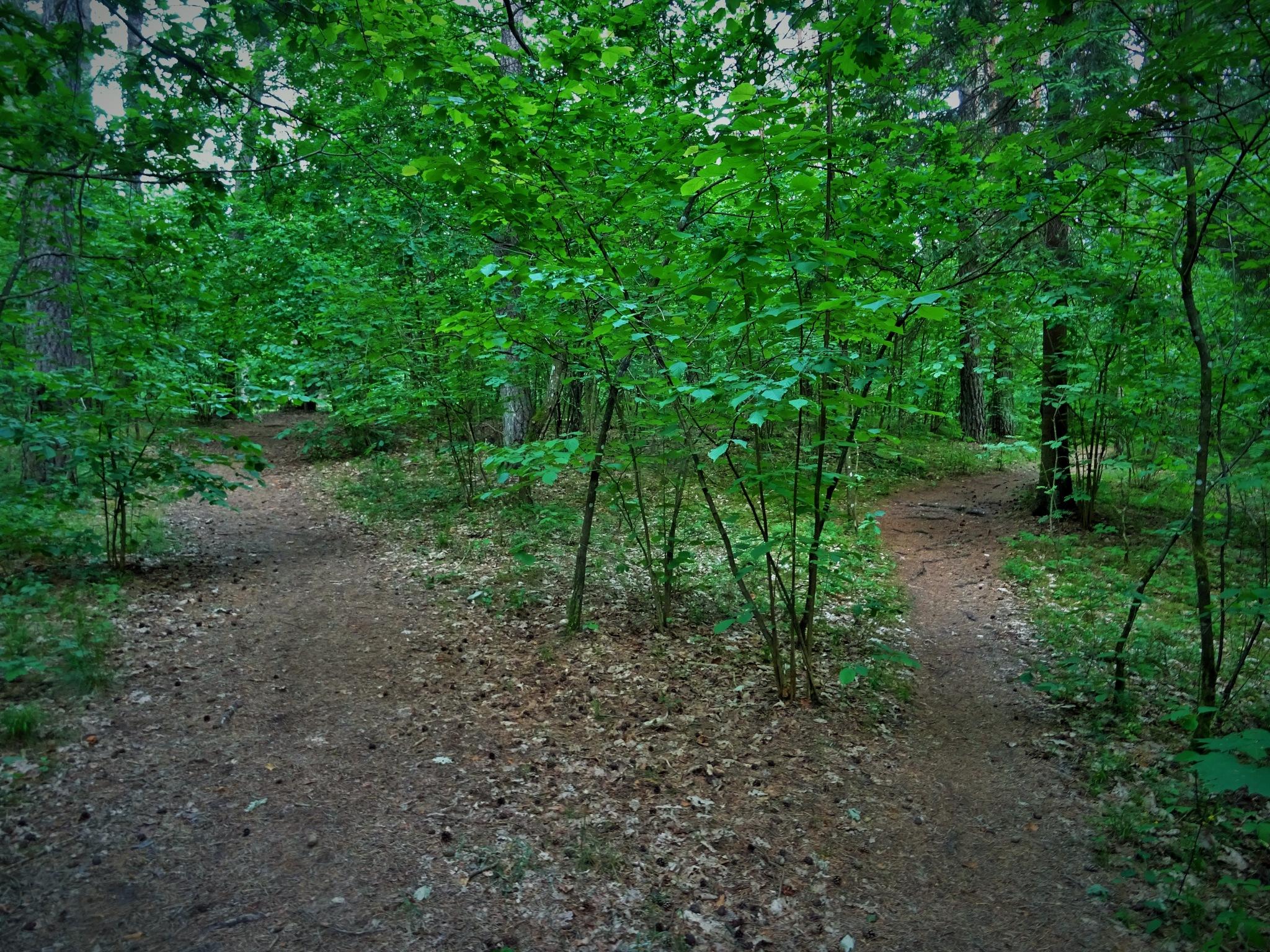 Chose the path. by vita.tucaite