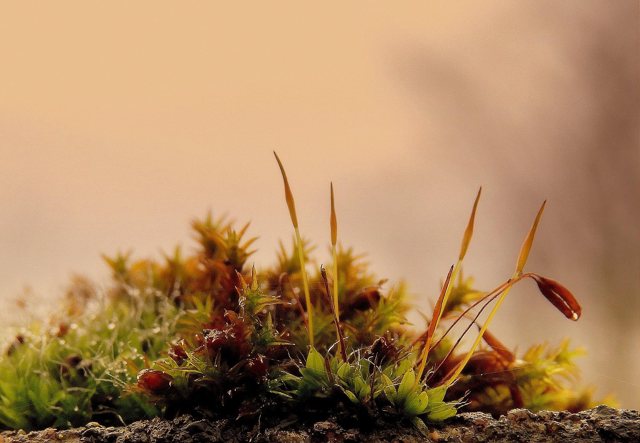 moss6 by johan.vandergouw