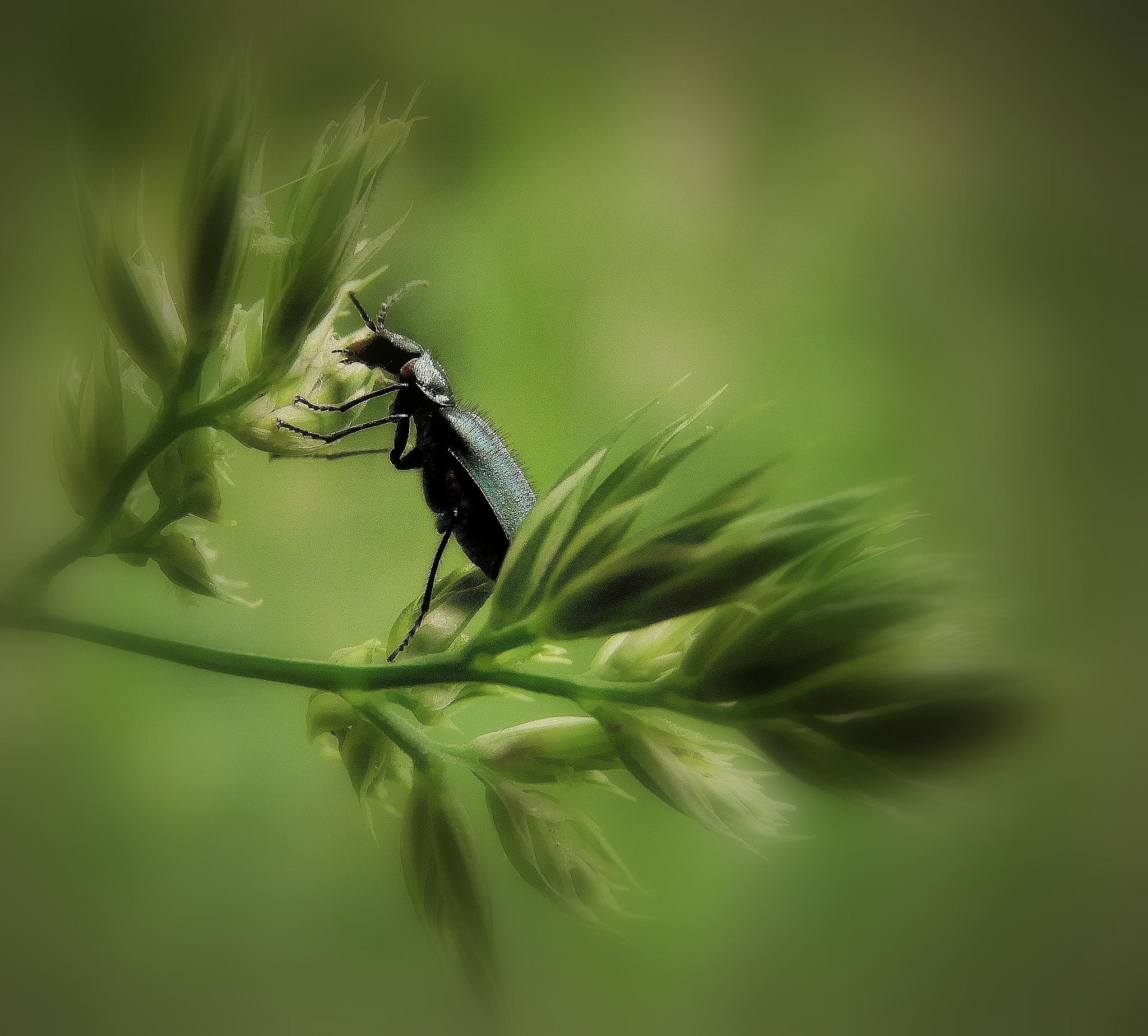 curious beetle        by johan.vandergouw