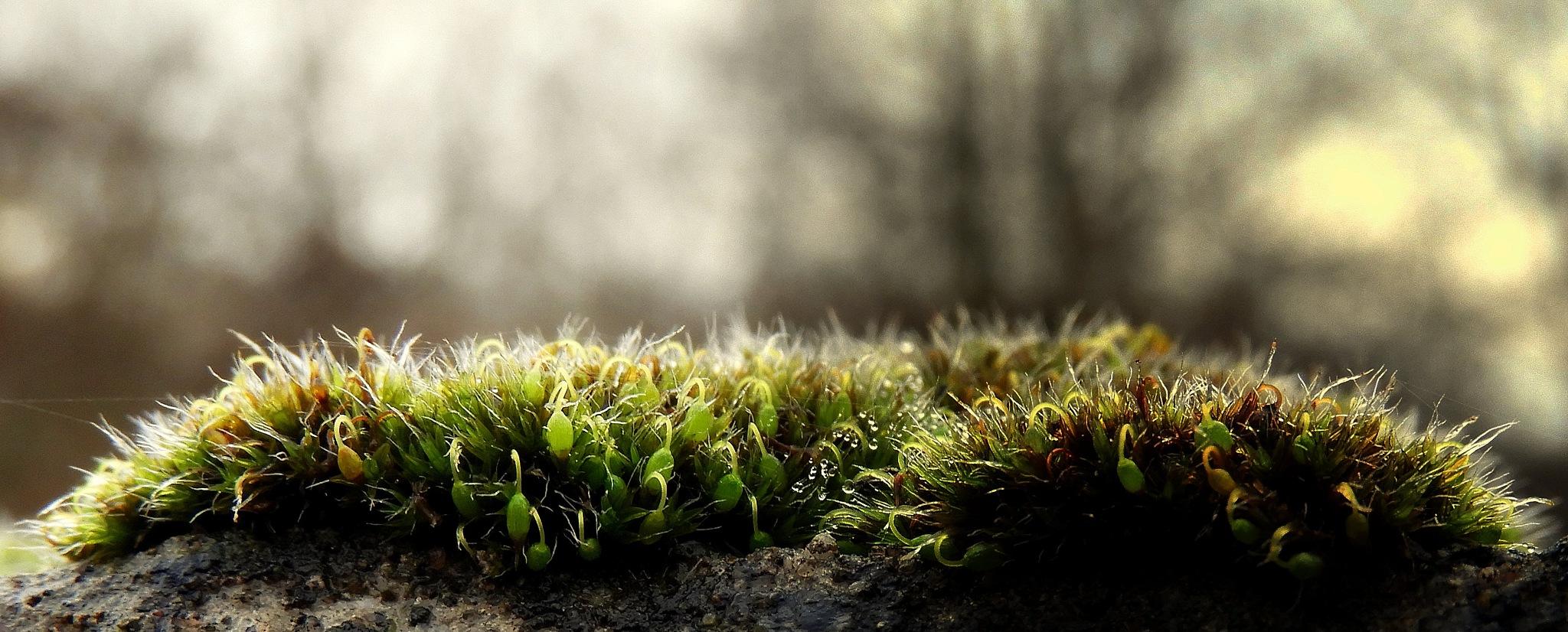 moss4 by johan.vandergouw