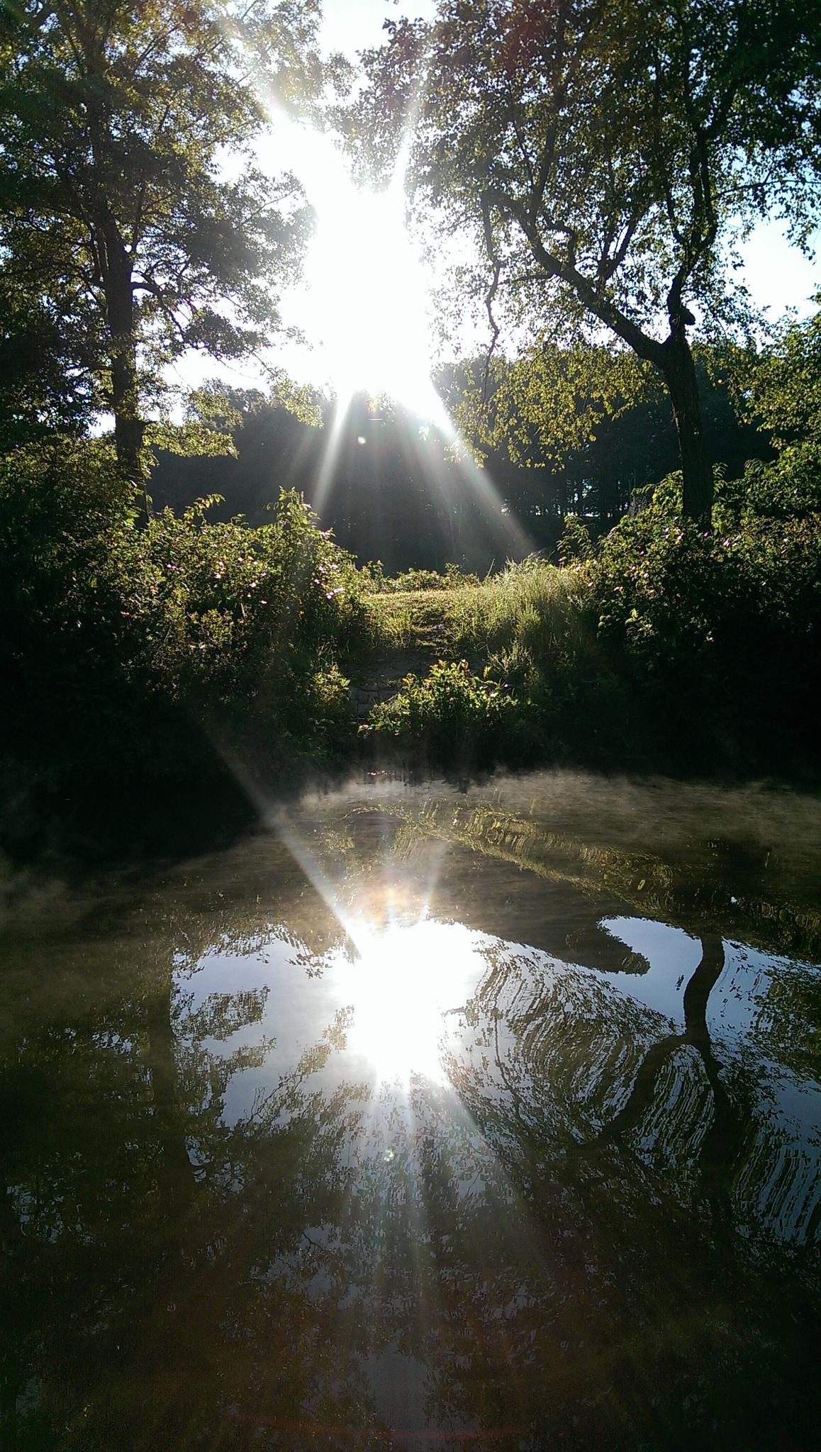 Double Sunshine by deanna.j.gallion