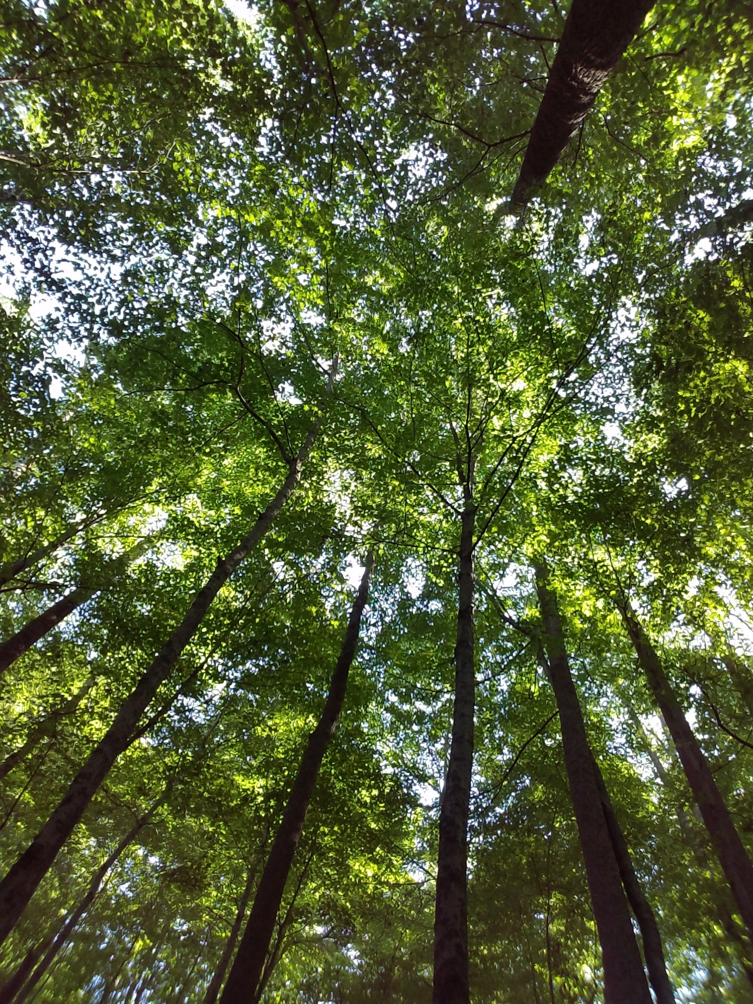 Trees Selfie by deanna.j.gallion