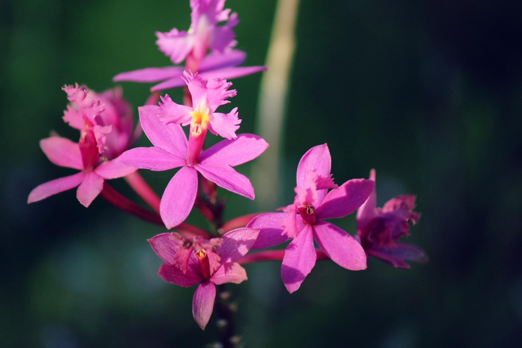 Photo in Macro #pink #orchids