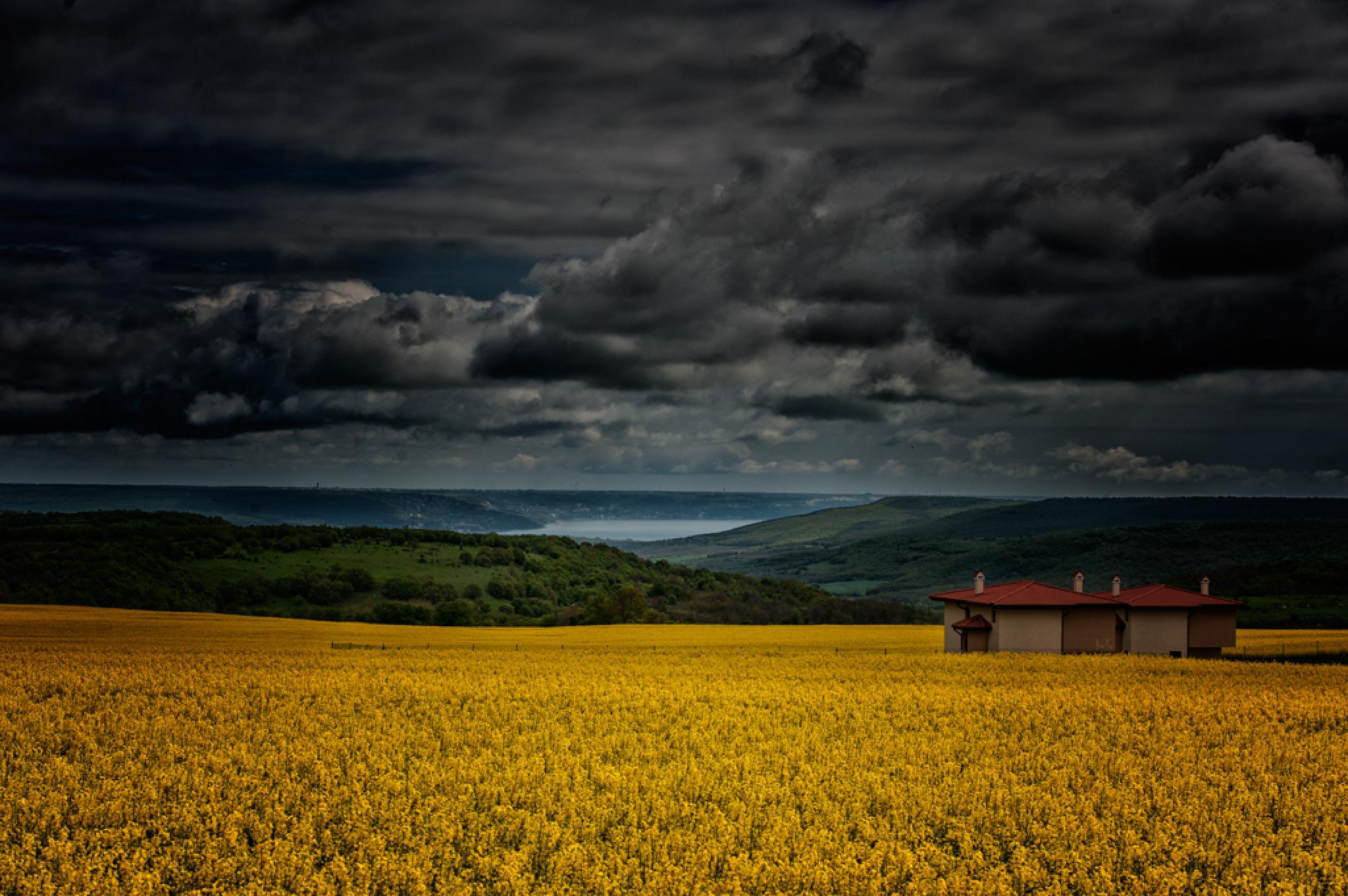 yellow day by lyubomir marinov-bulo