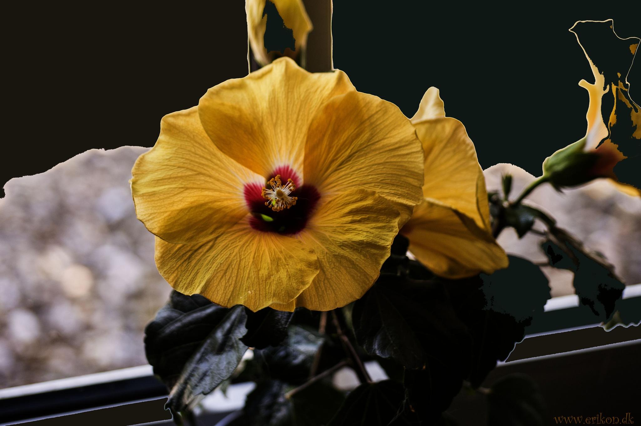 A flower in a window by Erik Nielsen/www.erikon.dk