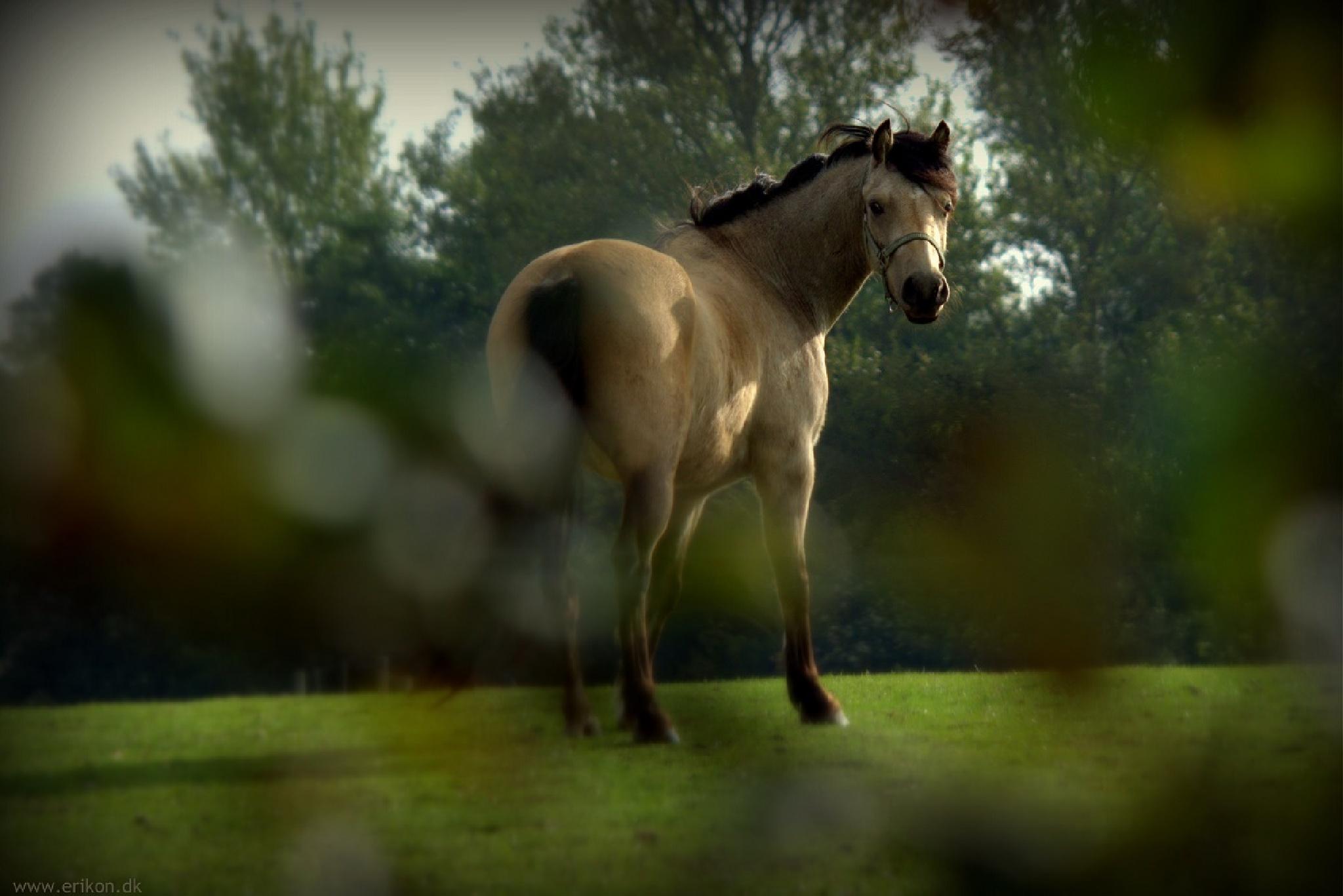 Horse by Erik Nielsen/www.erikon.dk
