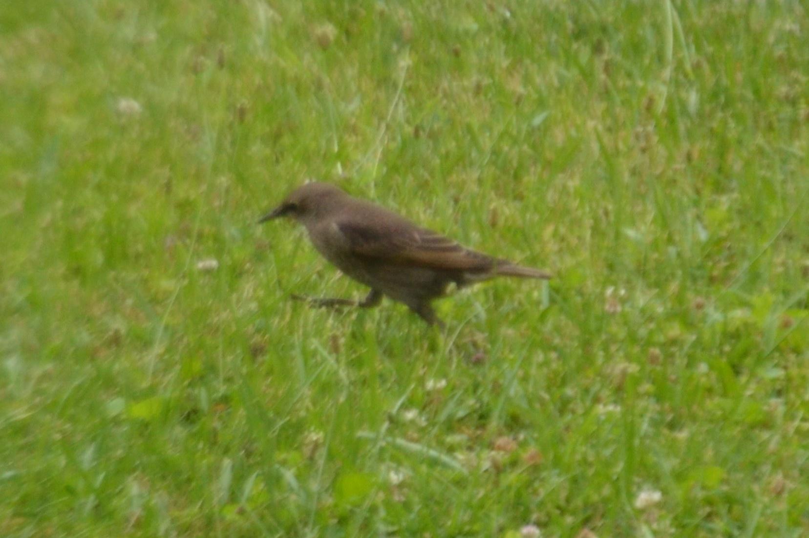Little Running Bird by adelaide.brownhay.1