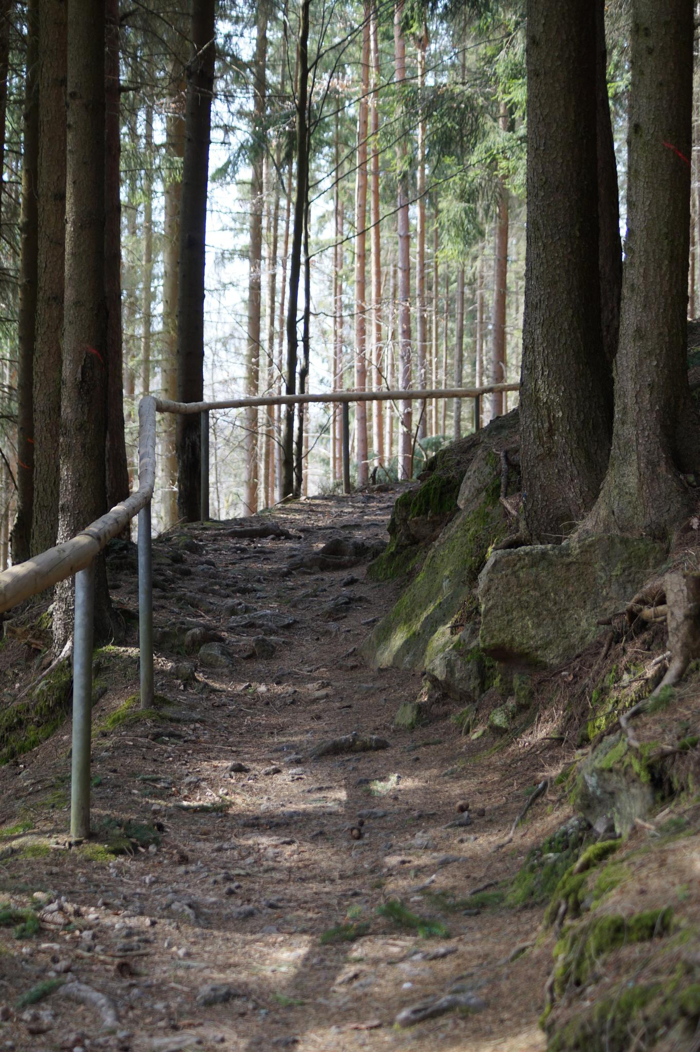 Path in the woods by linda.spielmann