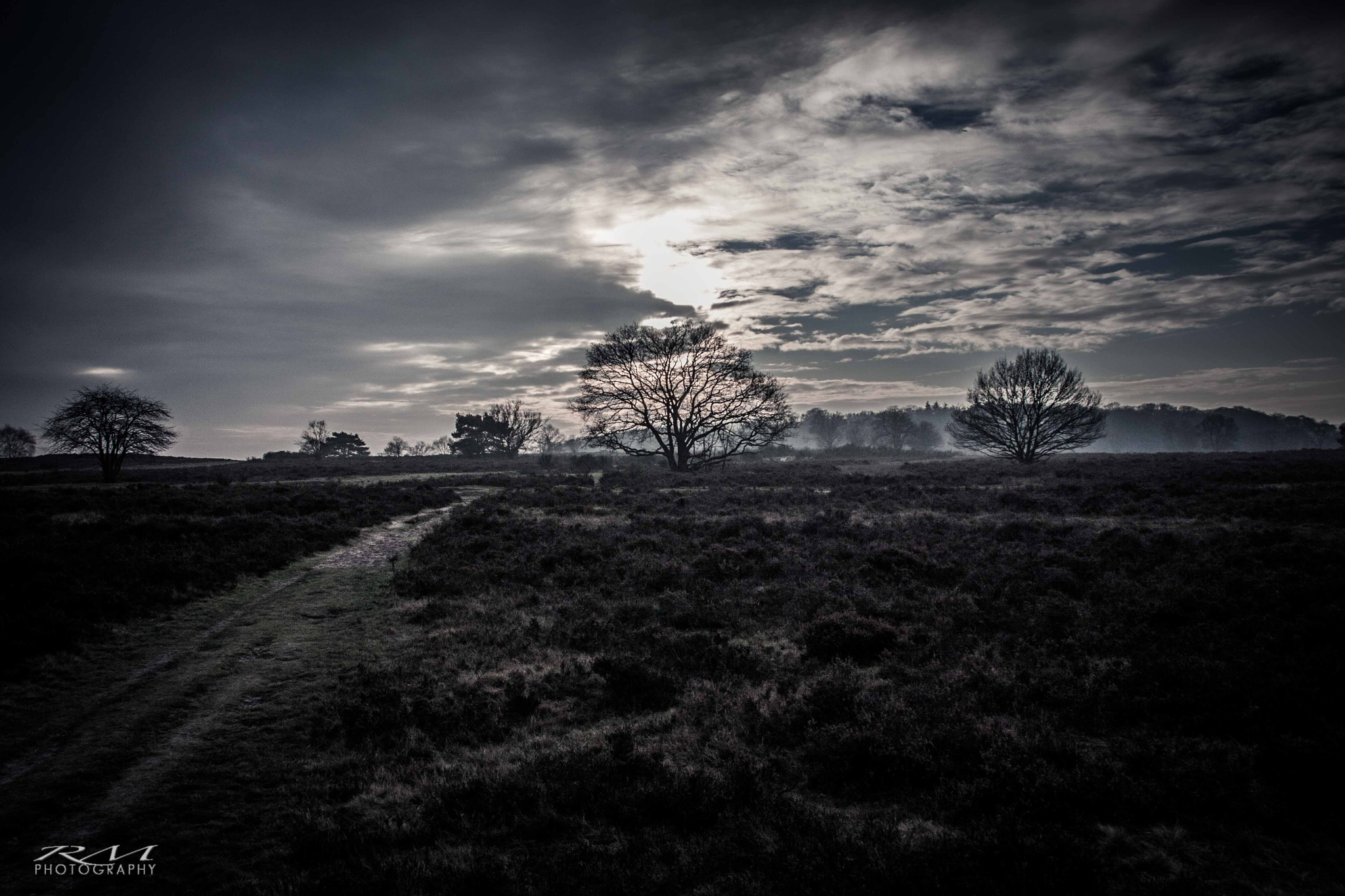 Hoorneboegse Heide, Hilversum by RM Photography