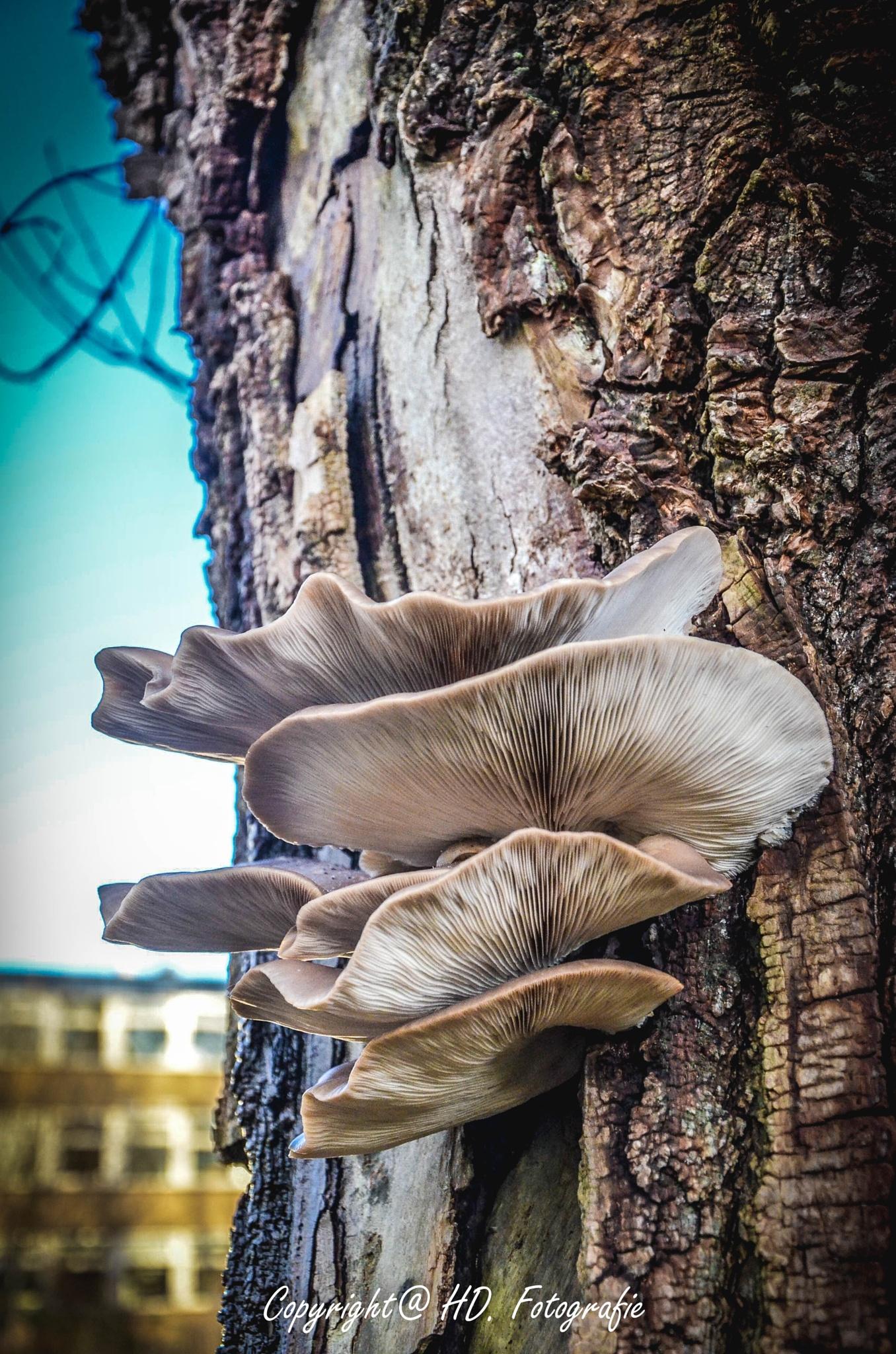 Three Fungus by hennie.driessen.7
