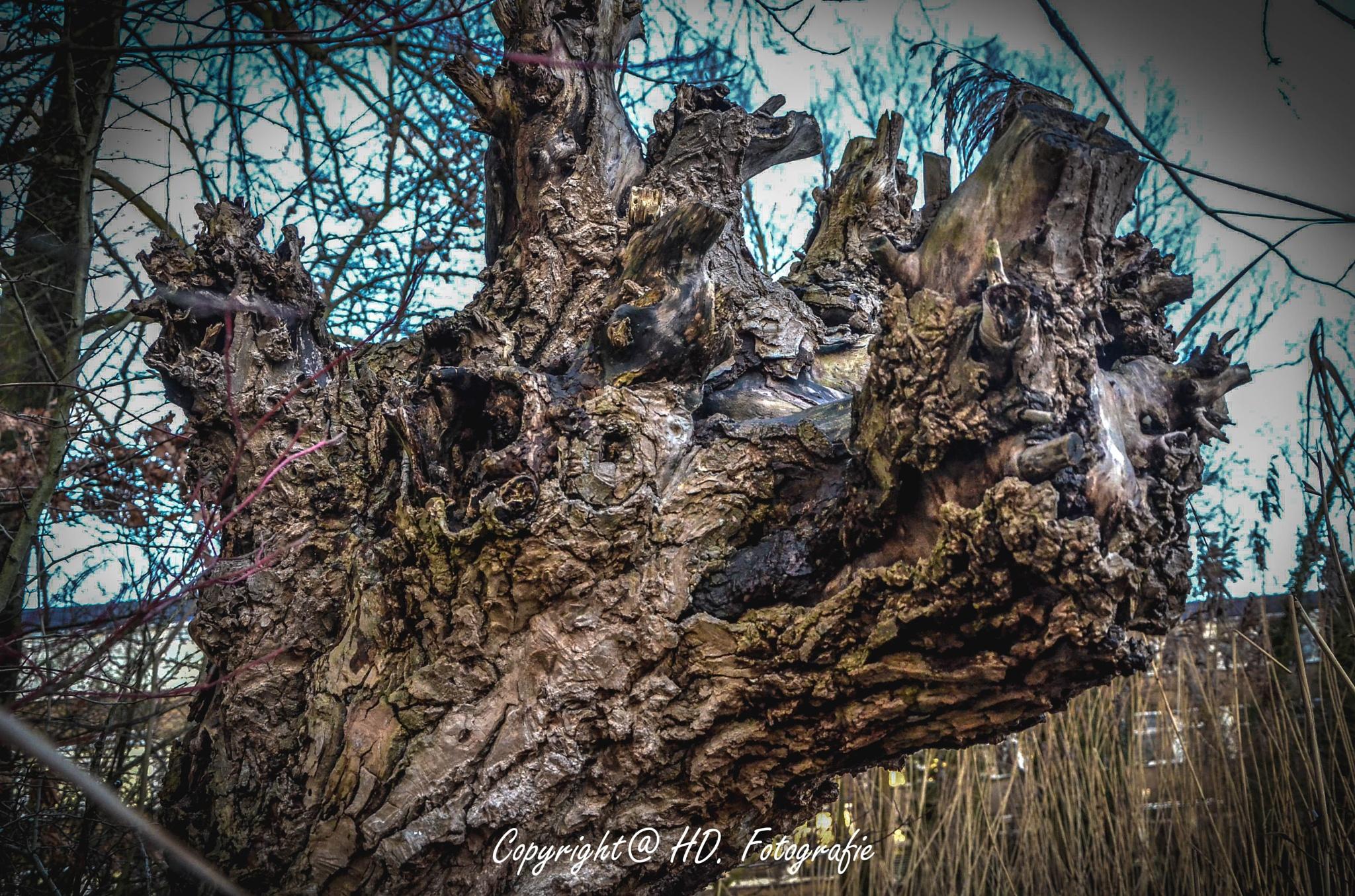 Old Willow by hennie.driessen.7
