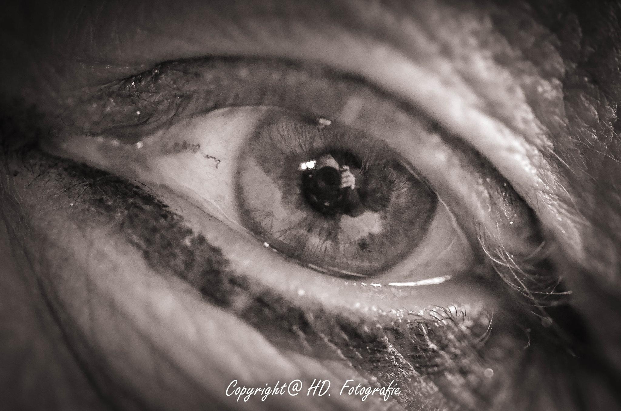 All-seeing eye by hennie.driessen.7