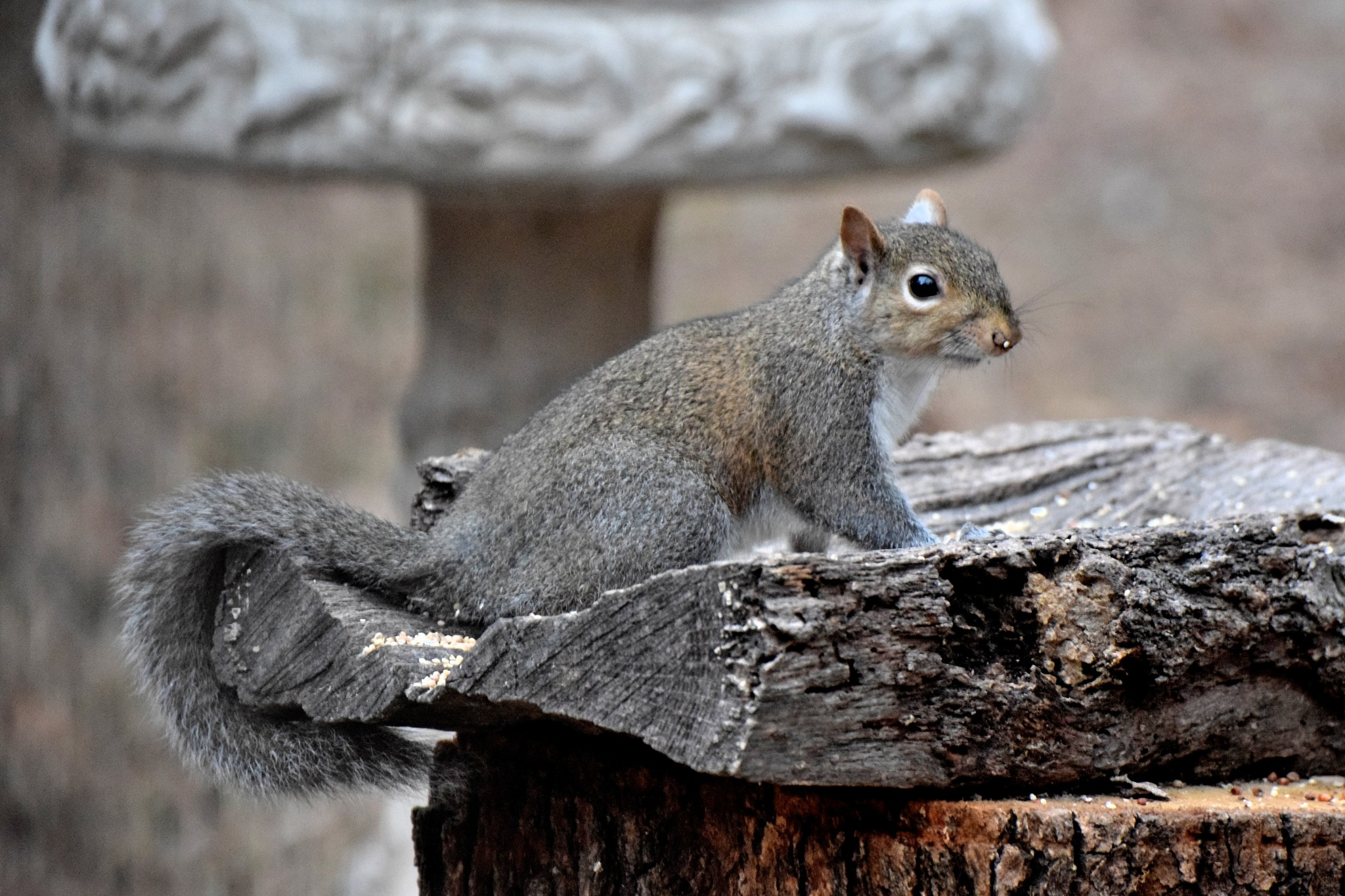 Todays Art 6211~Pretty Squirrel by Lawrence Scott Hess