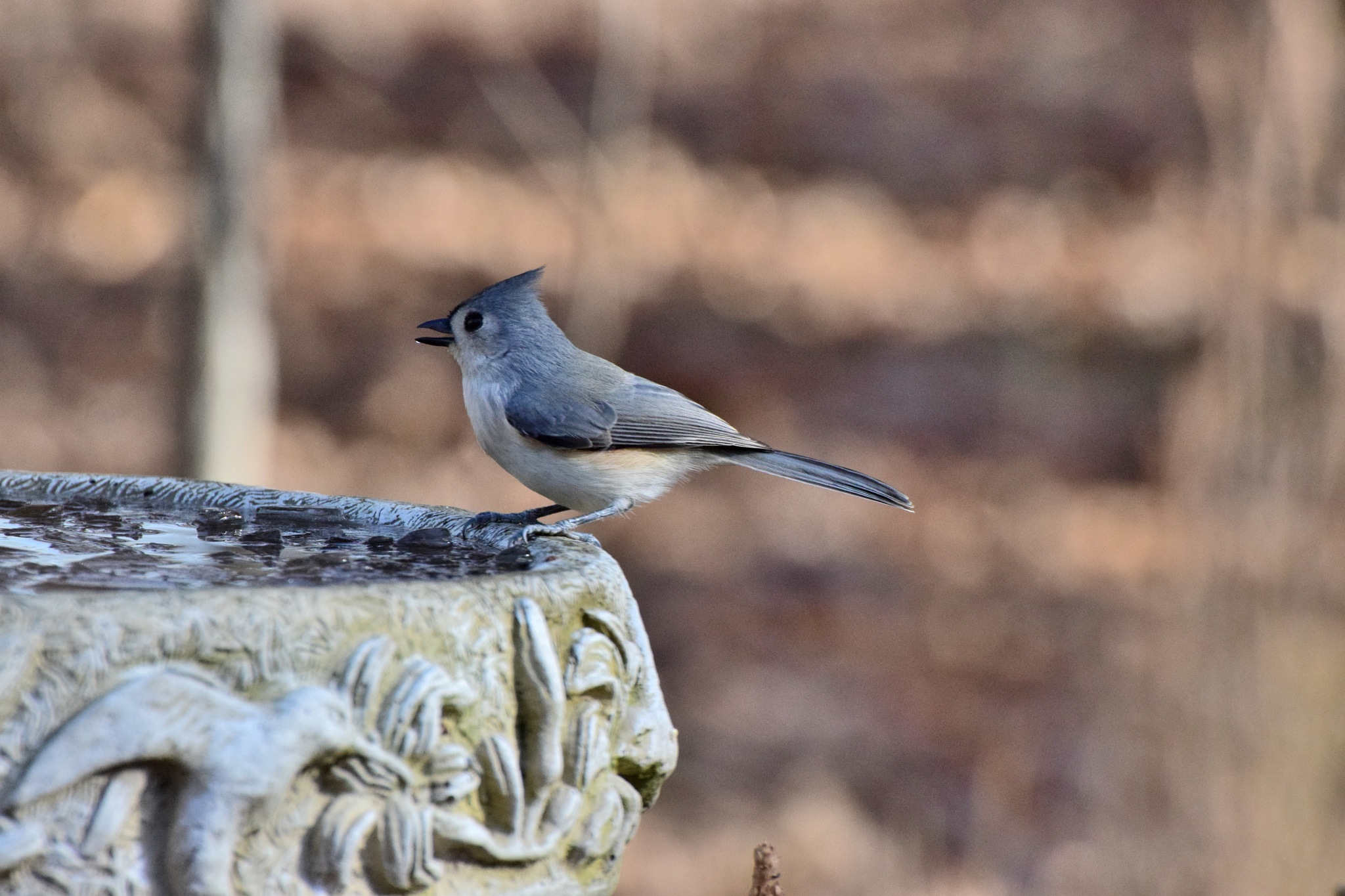 Winter Birds 317~Pretty Little Titmouse by Lawrence Scott Hess