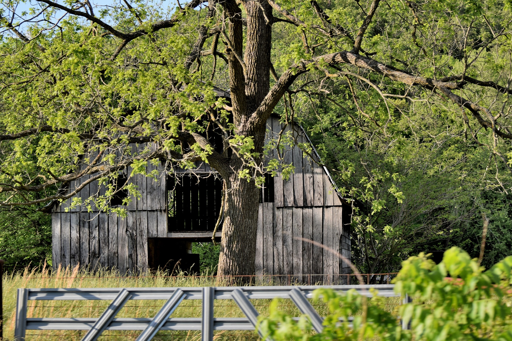 Todays Art 4637~Old Barns by Lawrence Scott Hess