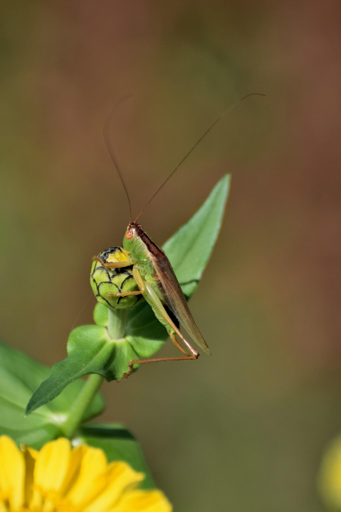Todays Art 5363~The Grasshopper by Lawrence Scott Hess
