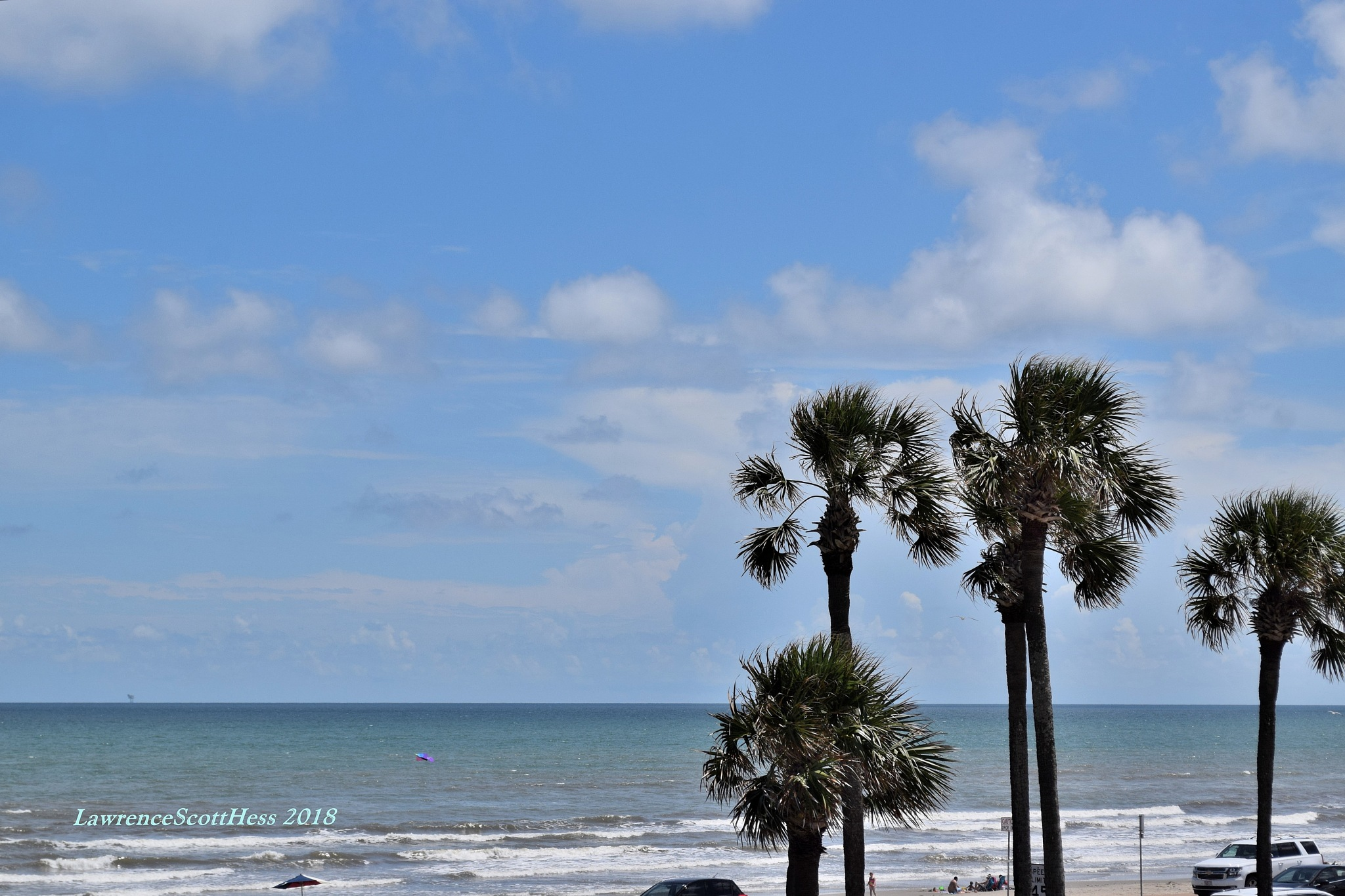 Galveston 659~The Breezy Palms by Lawrence Scott Hess