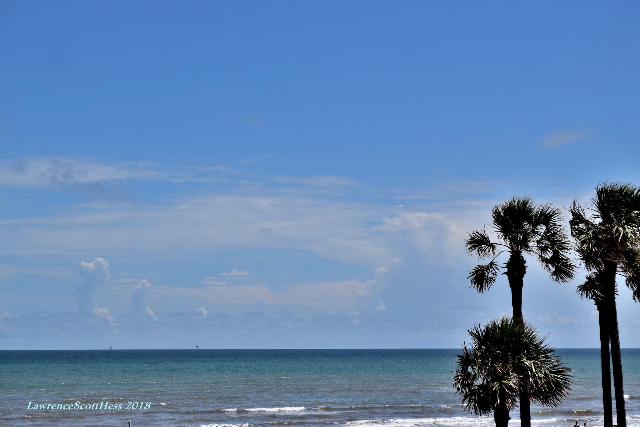 Galveston 658~Ocean Palms by Lawrence Scott Hess