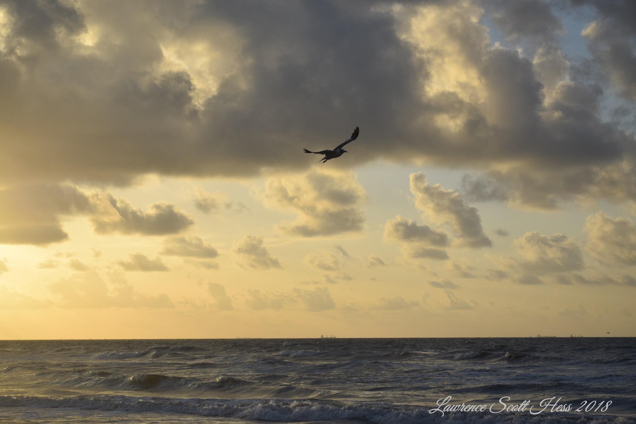 Galveston  (2100)~Seabird by Lawrence Scott Hess