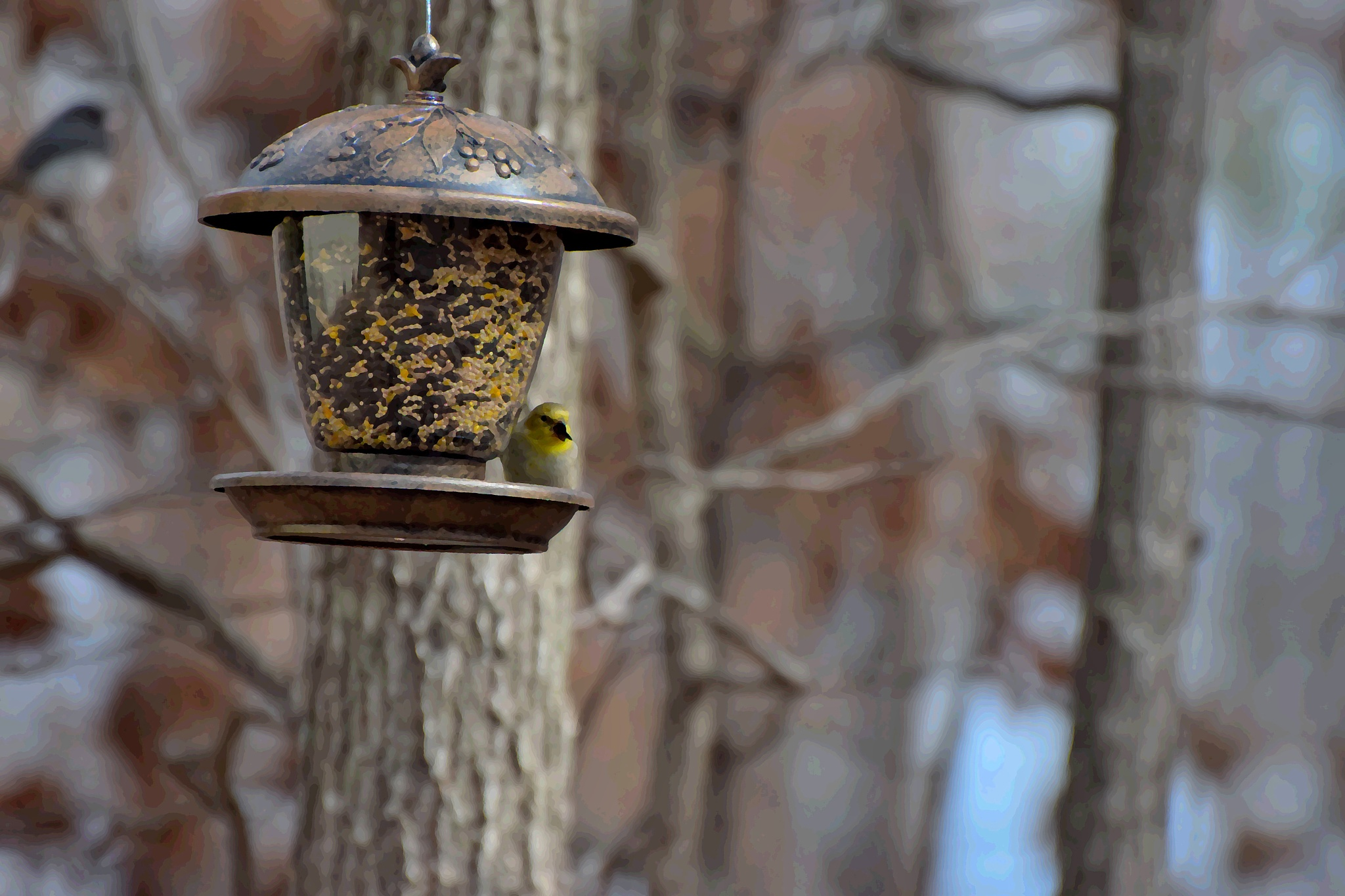 Photo in Abstract #bird #bird feeder #seed #golden finch #arkansawhillbilly #google me: lawrence scott hess