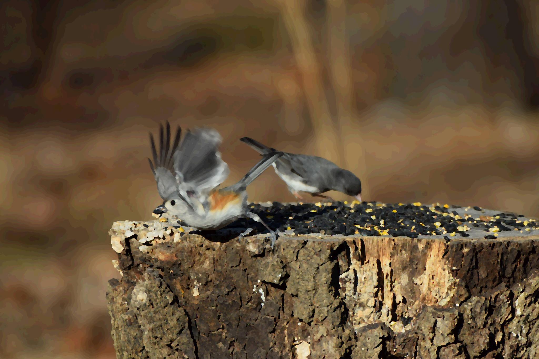 Rejects2Art 54~Birds Feeding by Lawrence Scott Hess