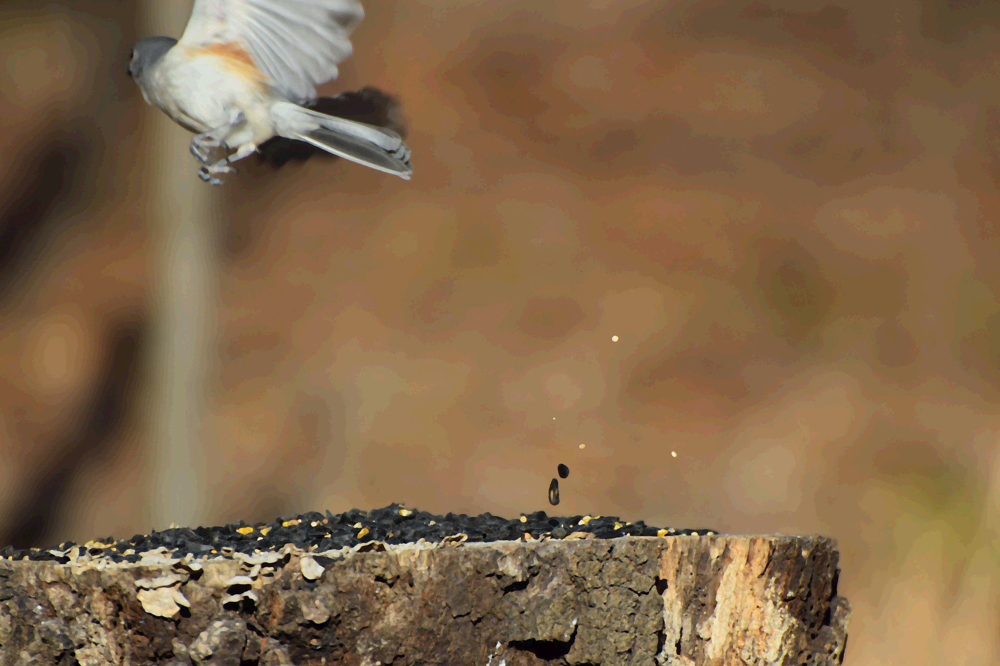 Rejects2Art 58~Flying Bird Seed by Lawrence Scott Hess