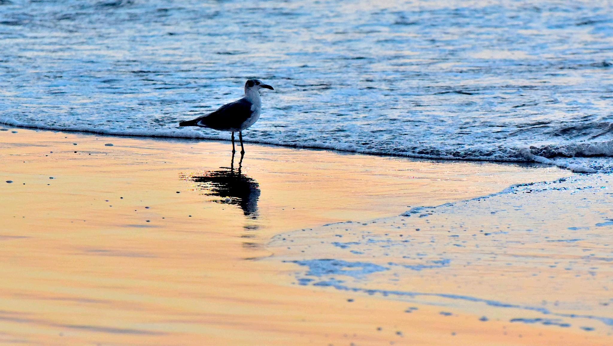 Galveston Birds 94 by Lawrence Scott Hess