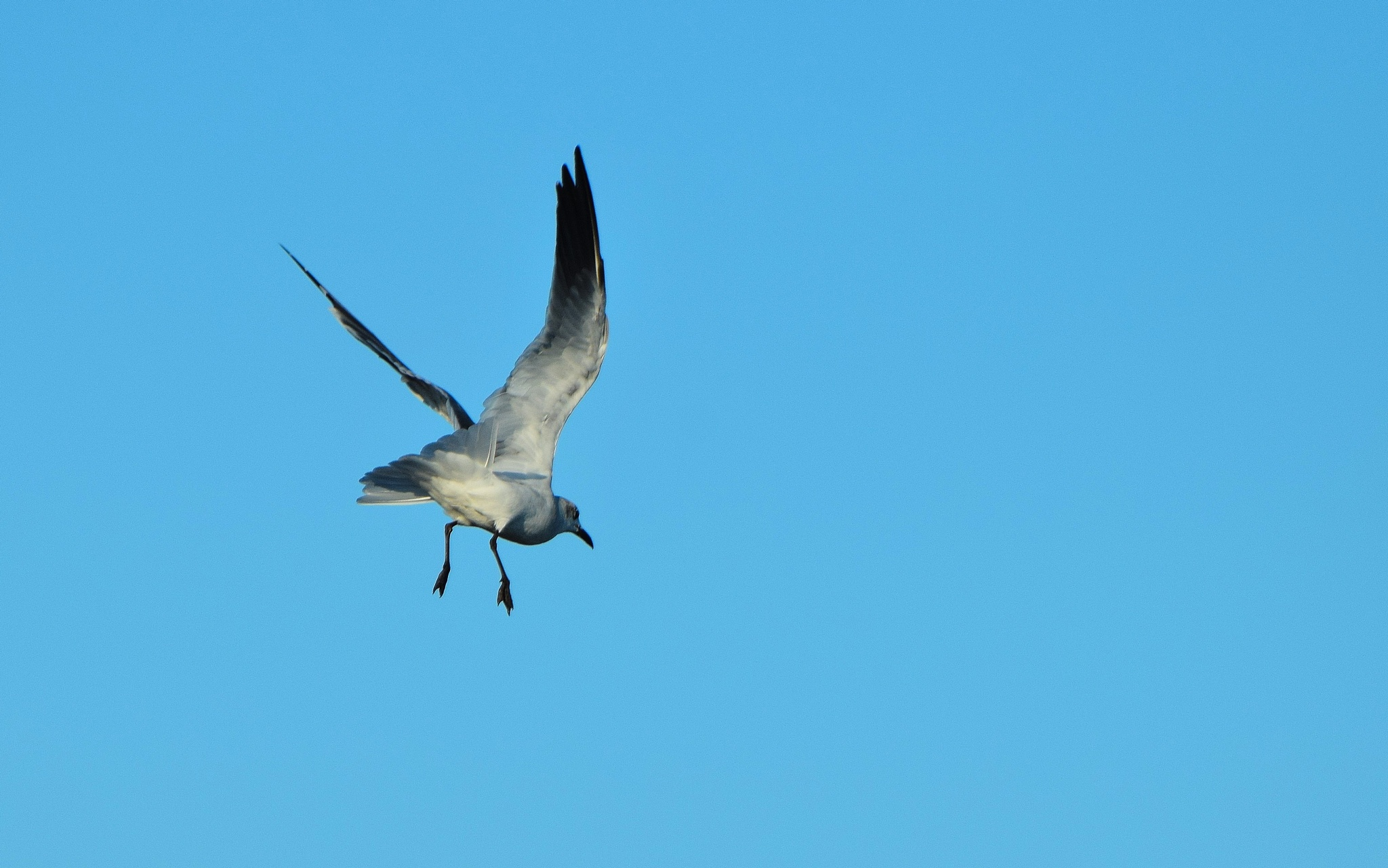 Galveston Birds 73 by Lawrence Scott Hess