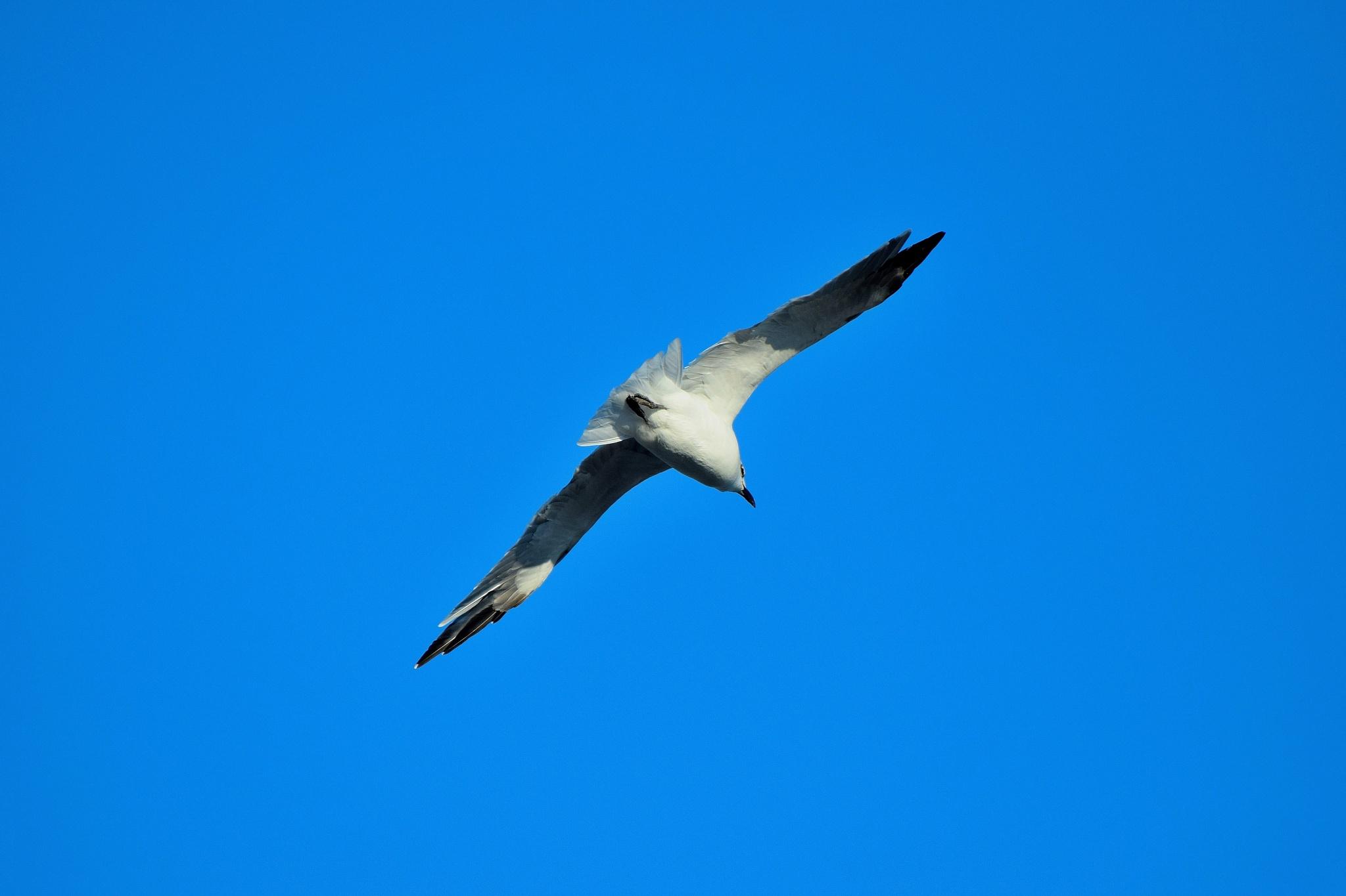 Galveston Birds 77 by Lawrence Scott Hess
