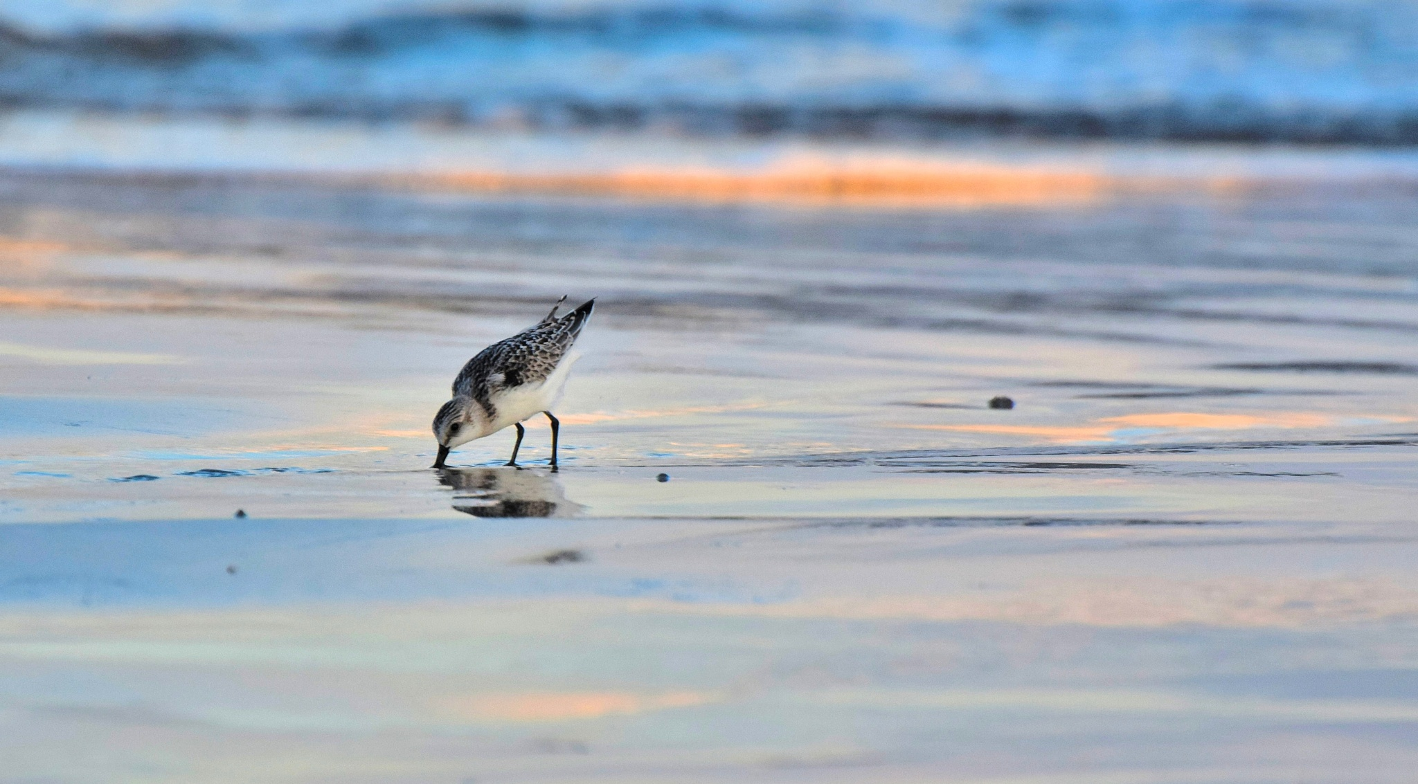 Galveston Birds 80 by Lawrence Scott Hess