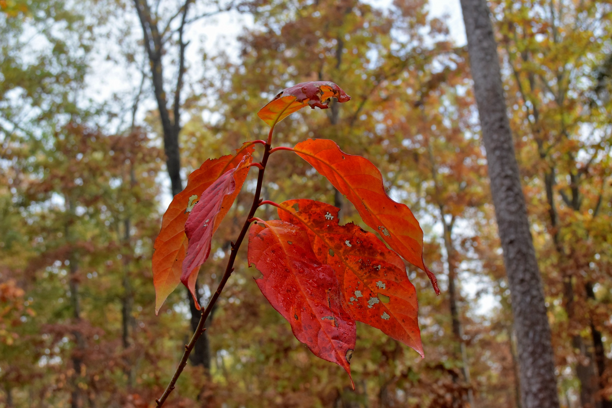 Todays Art 2518~Wet Leaves by Lawrence Scott Hess