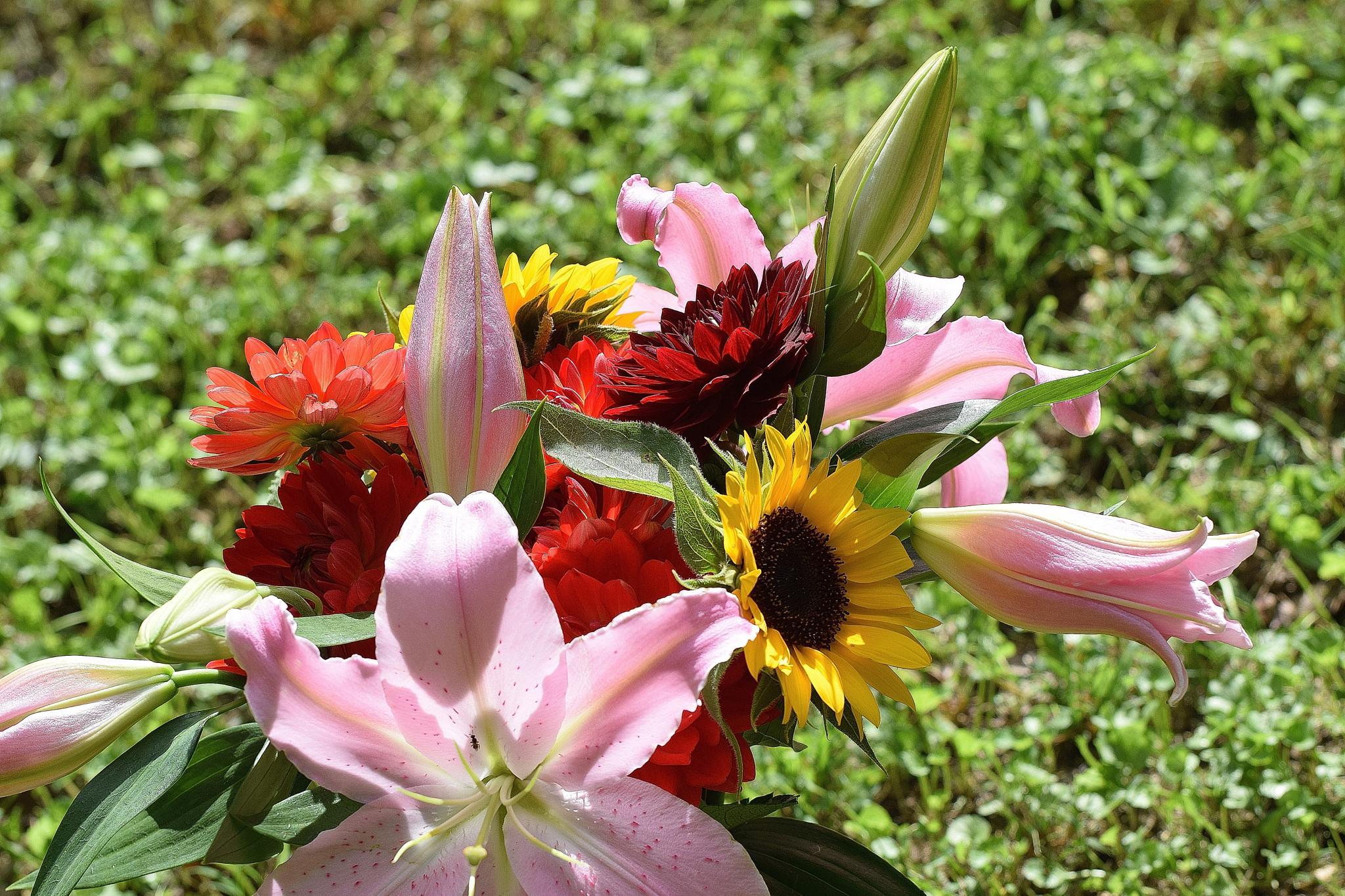 Flowers 48 by Lawrence Scott Hess