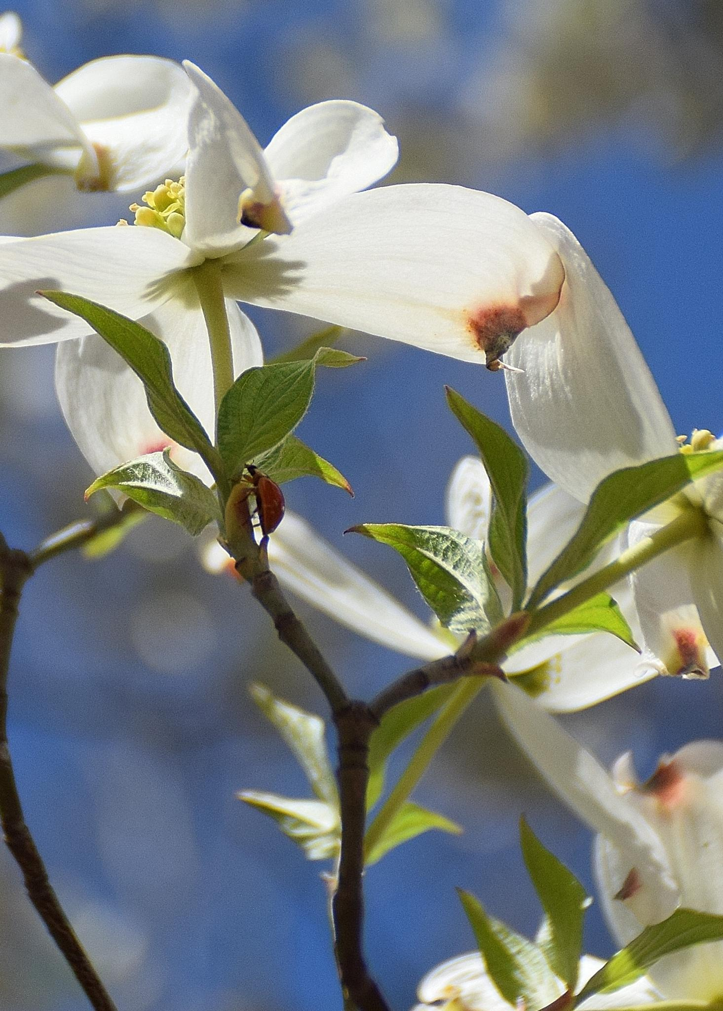 Flower 86~Lady Bug by Lawrence Scott Hess