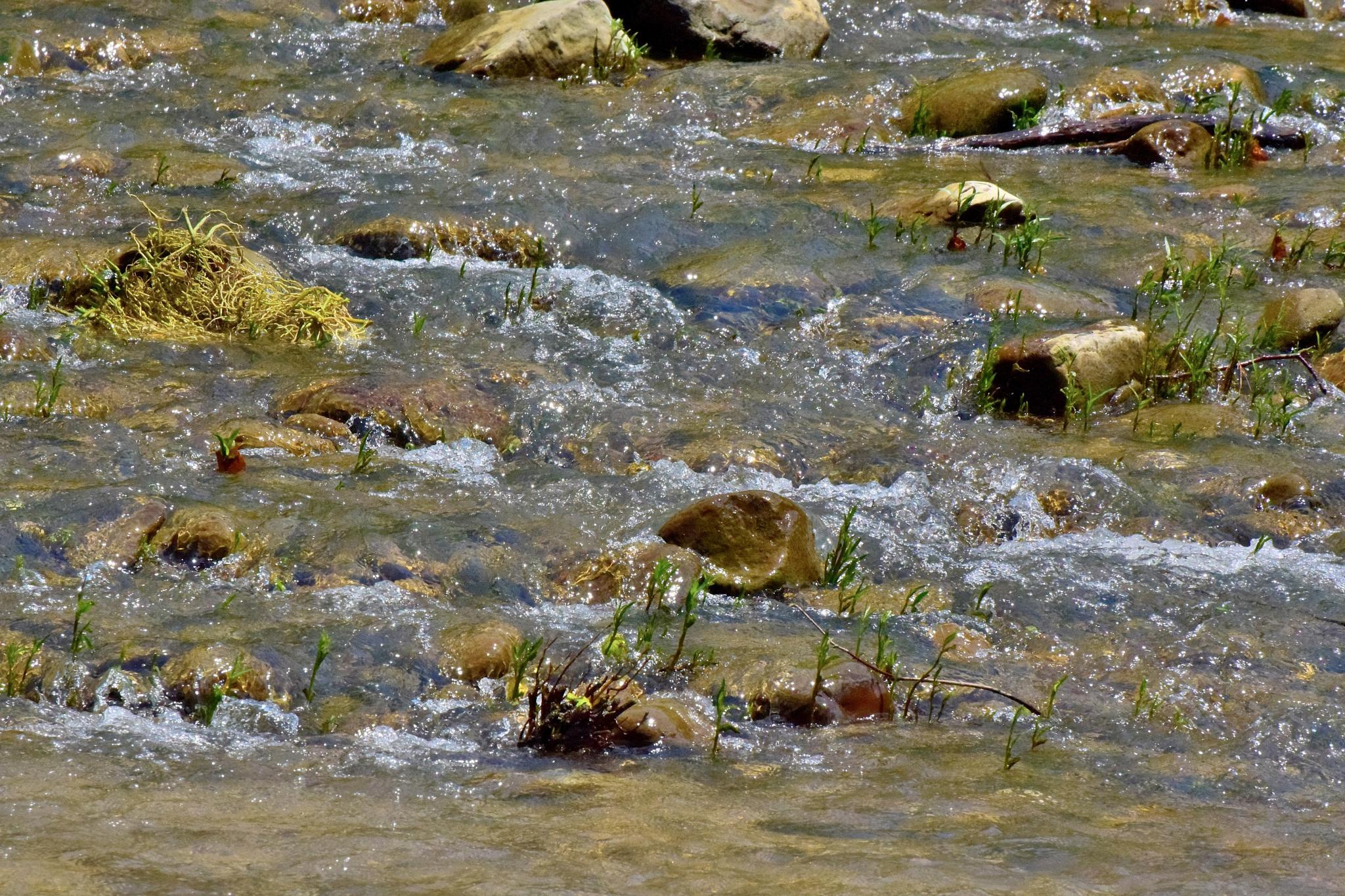 Todays Art 1184~Wet Rocks by Lawrence Scott Hess